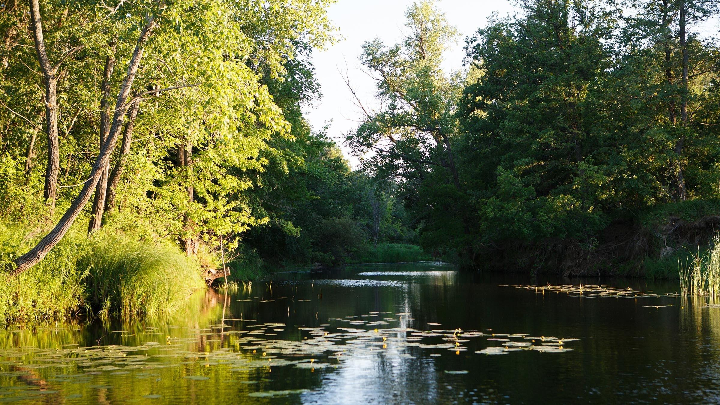 кувшинки озеро небо лес  № 1264677 без смс