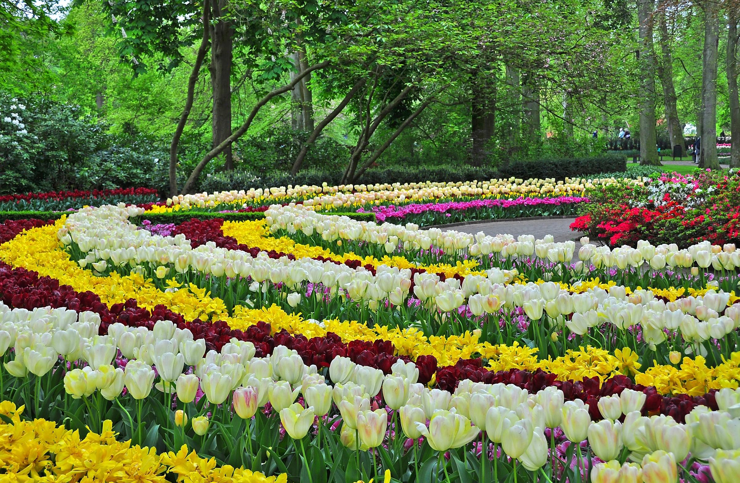 чистом цветник весной фото них завязалась