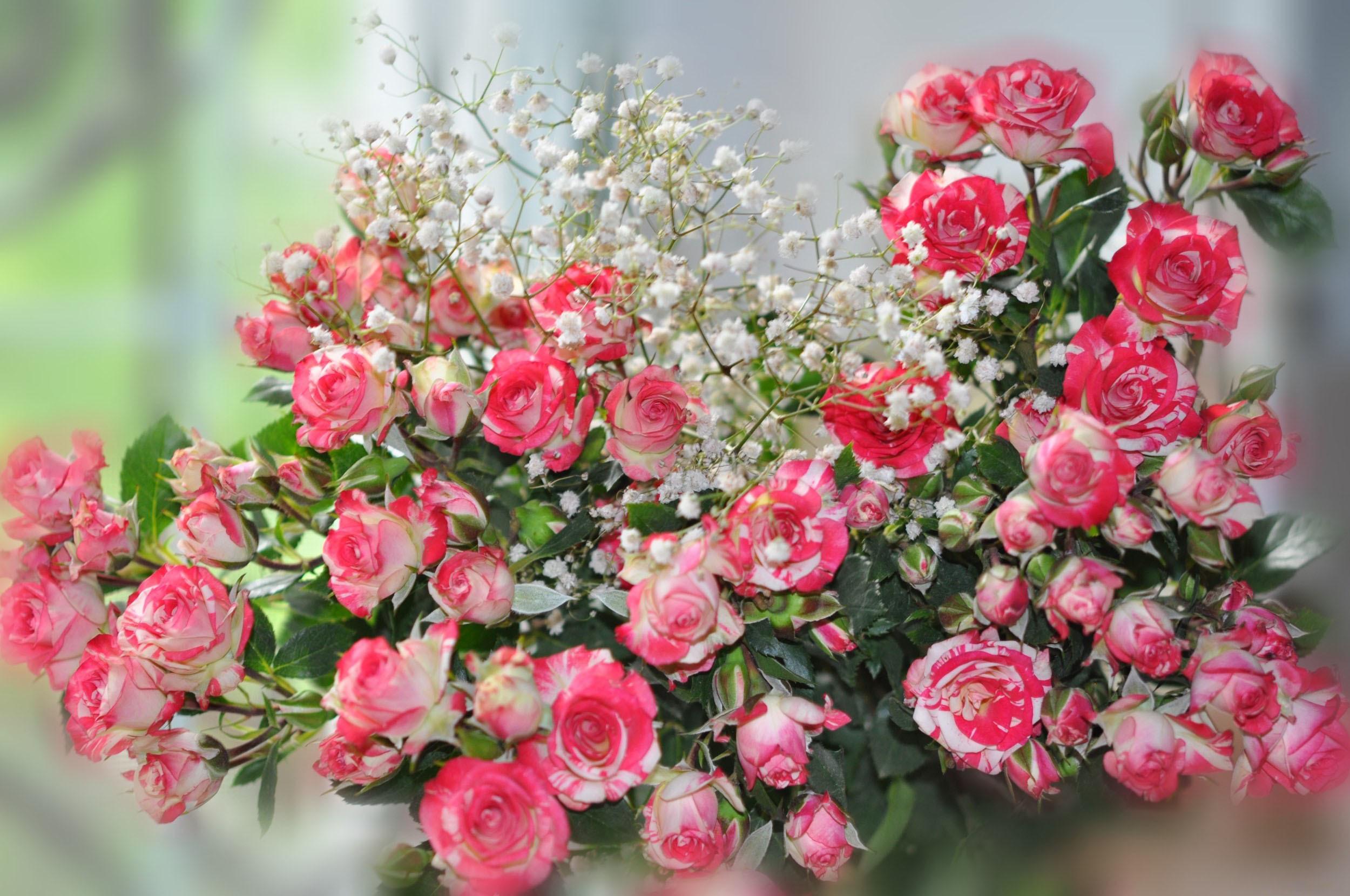 Небольшие картинки с цветами красивые, днем