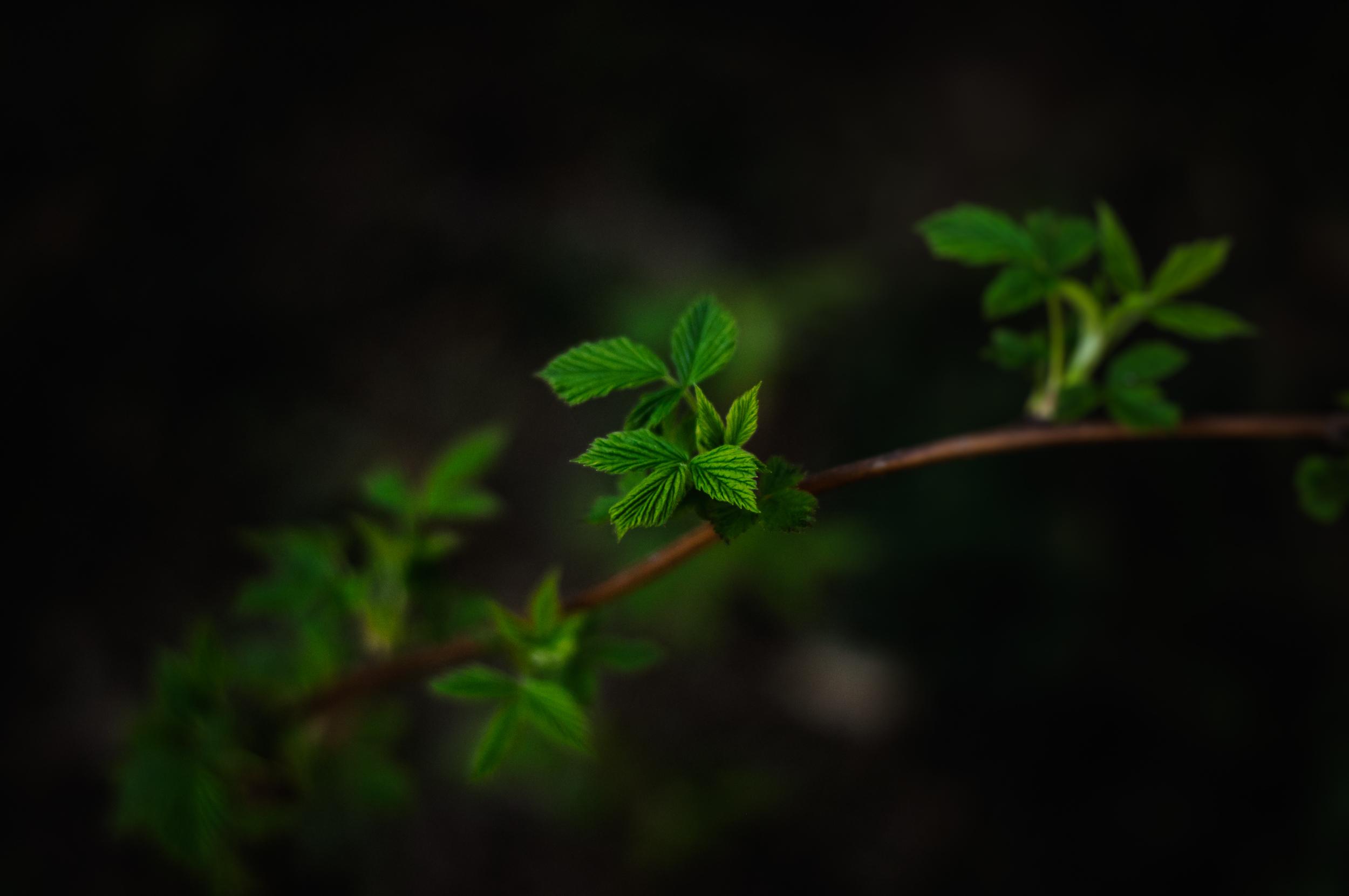 листья ветка фон  № 3219072  скачать