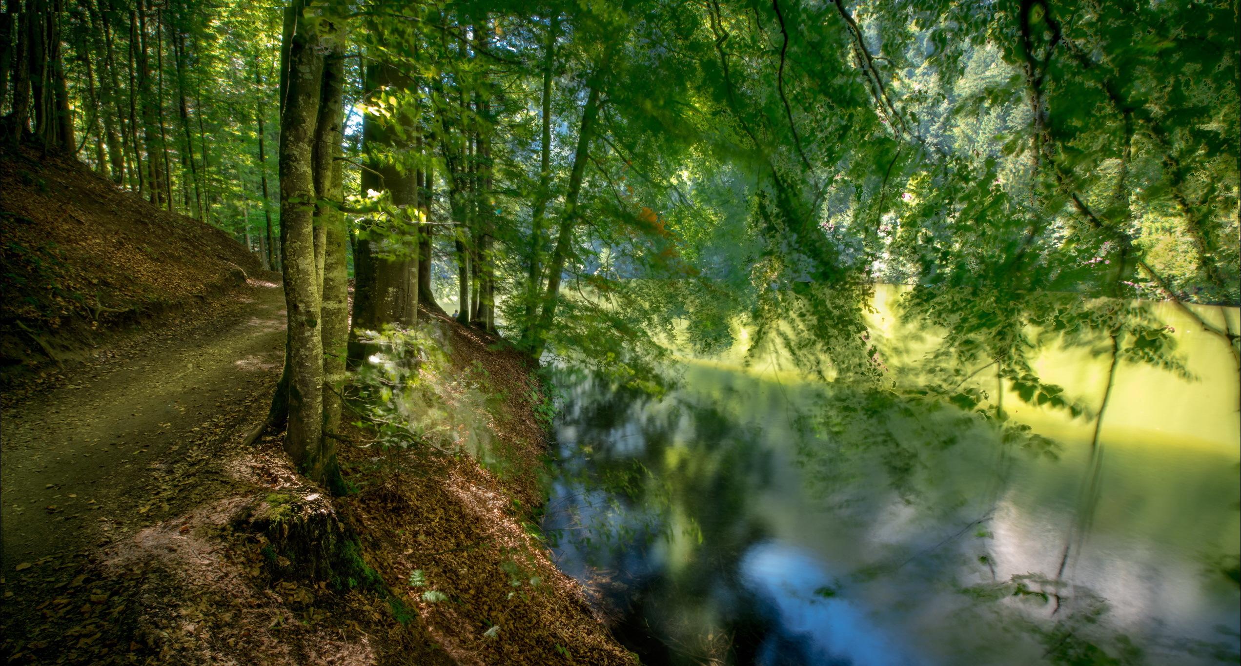 река лес  № 2789244  скачать