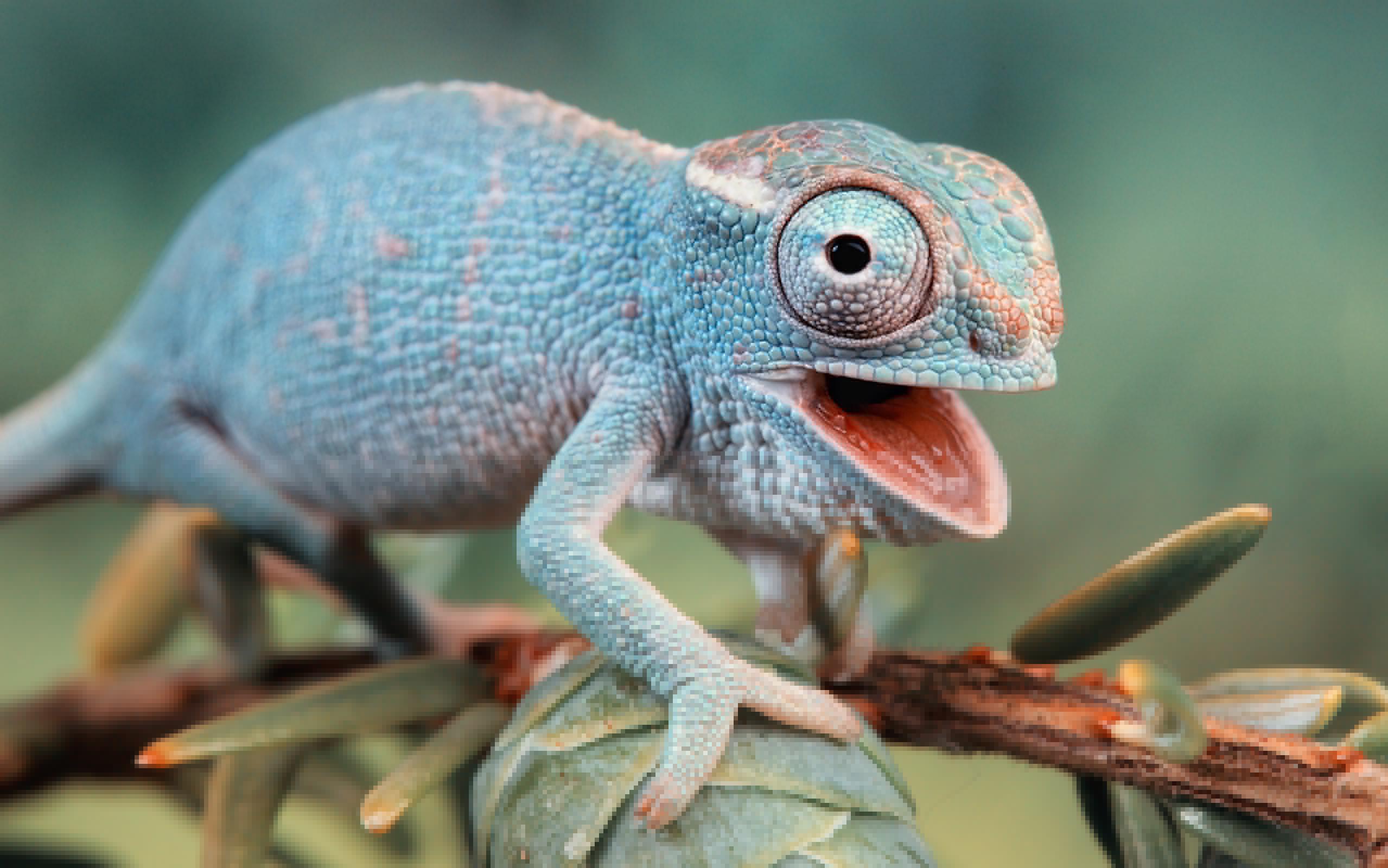 картинки хамелеона животное меладзе никогда
