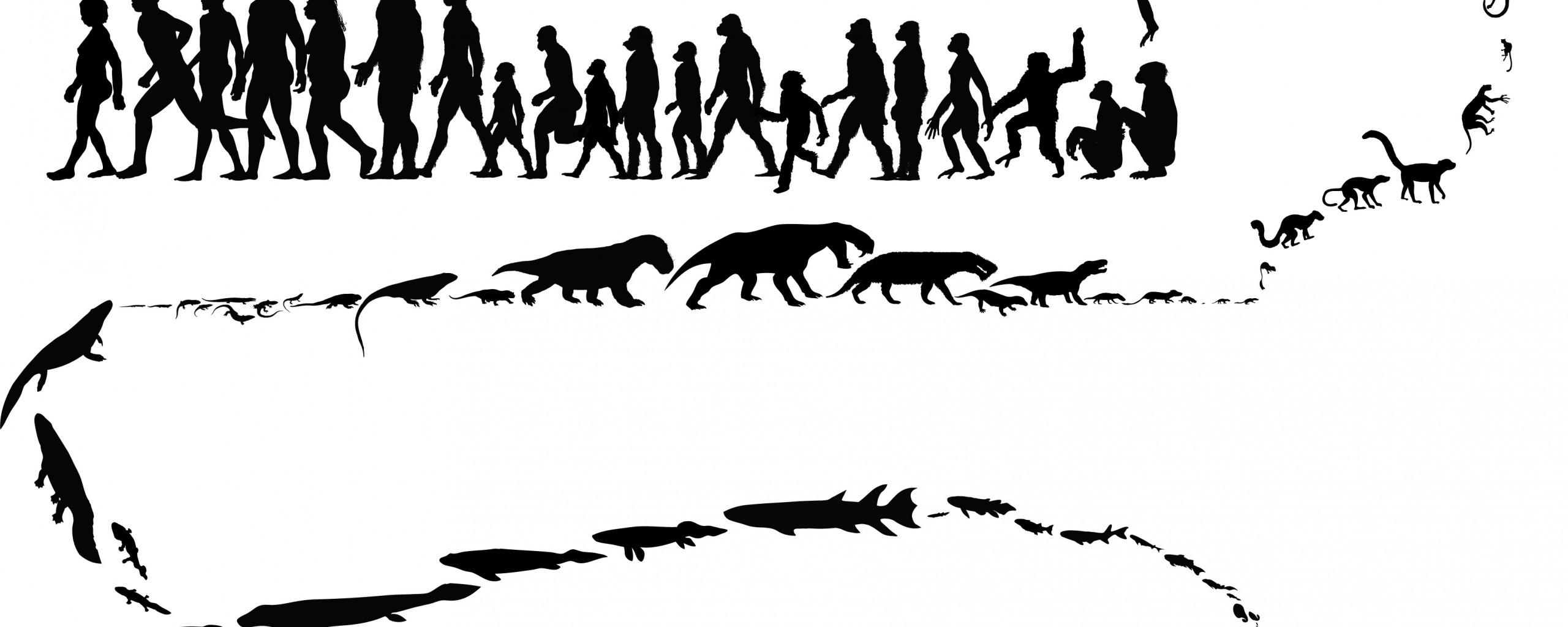 Картинка три, эволюция дарвина в картинках