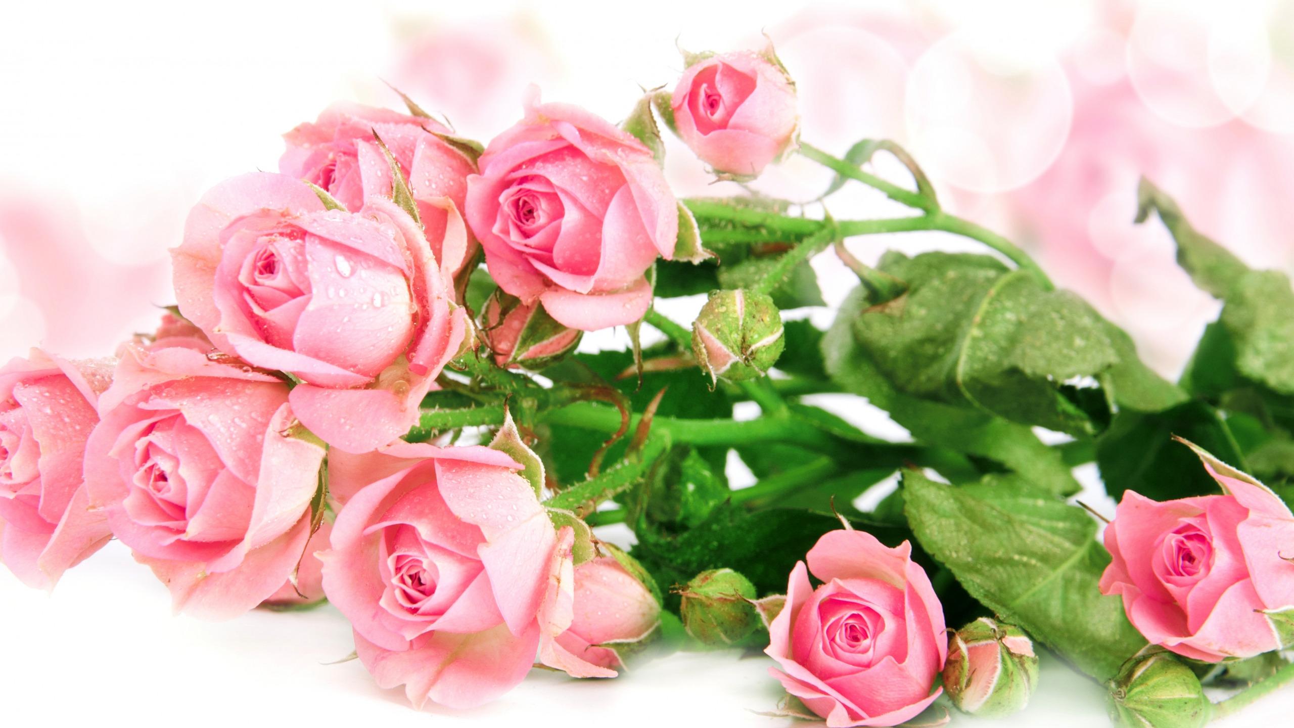 Поздравление цветы на весь экран