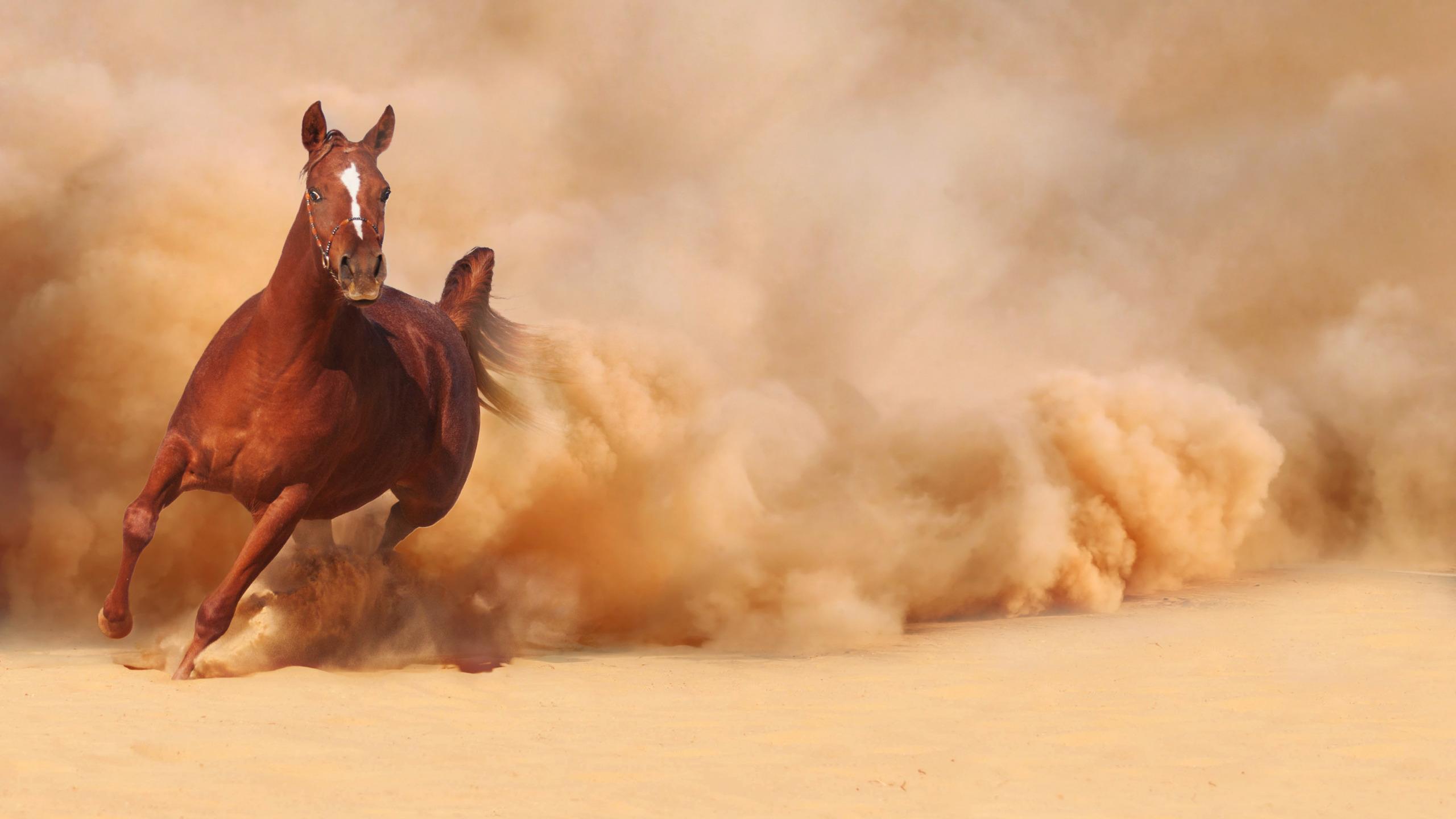 картинки убегаю от коня