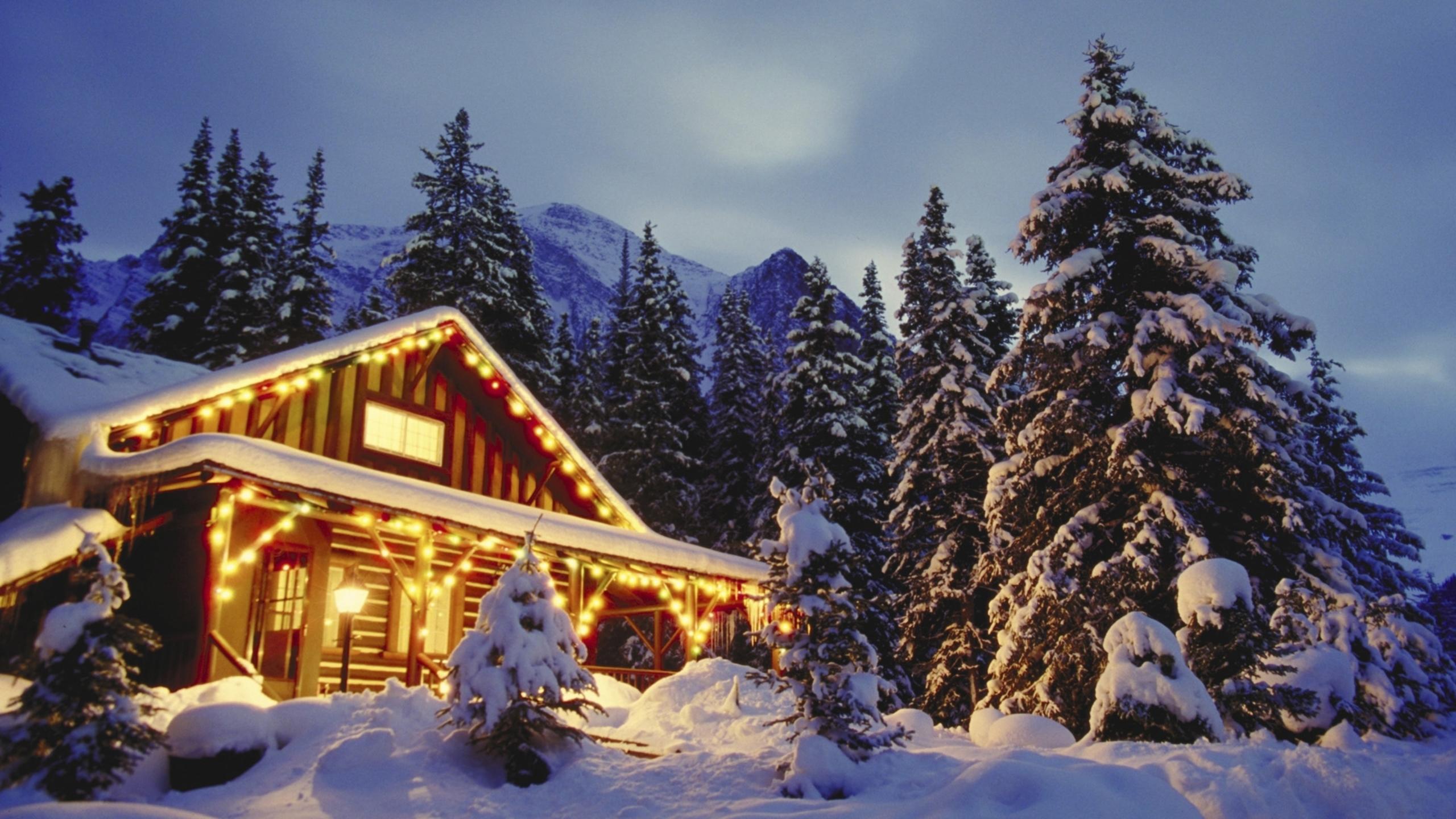 Картинки леса новогоднего