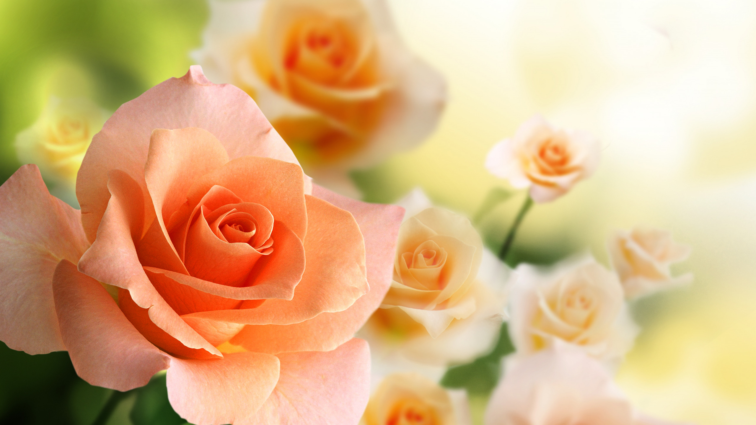 Цветы высокое разрешение — pic 2