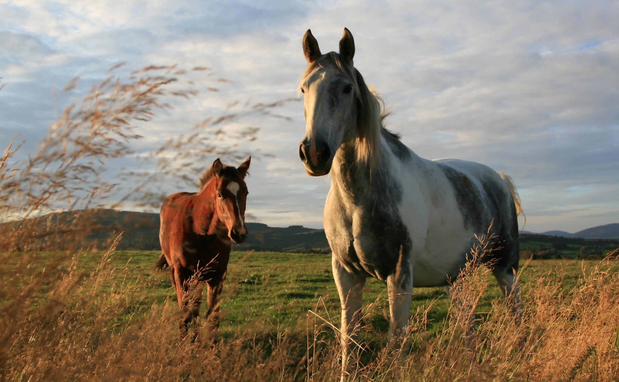 качественные обои на рабочий стол лошади № 503721  скачать