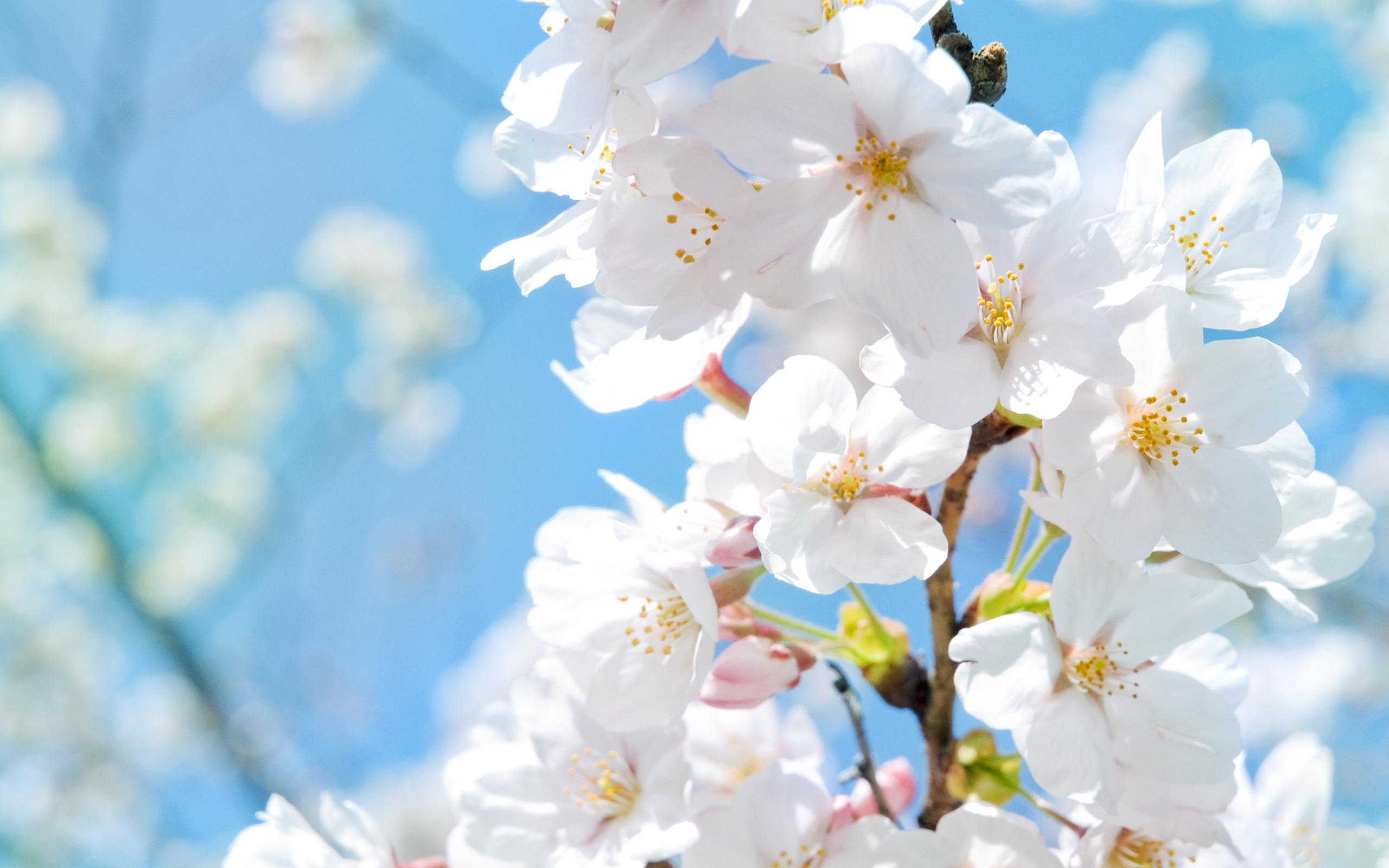 Поздровлениями день, картинки на телефон весна
