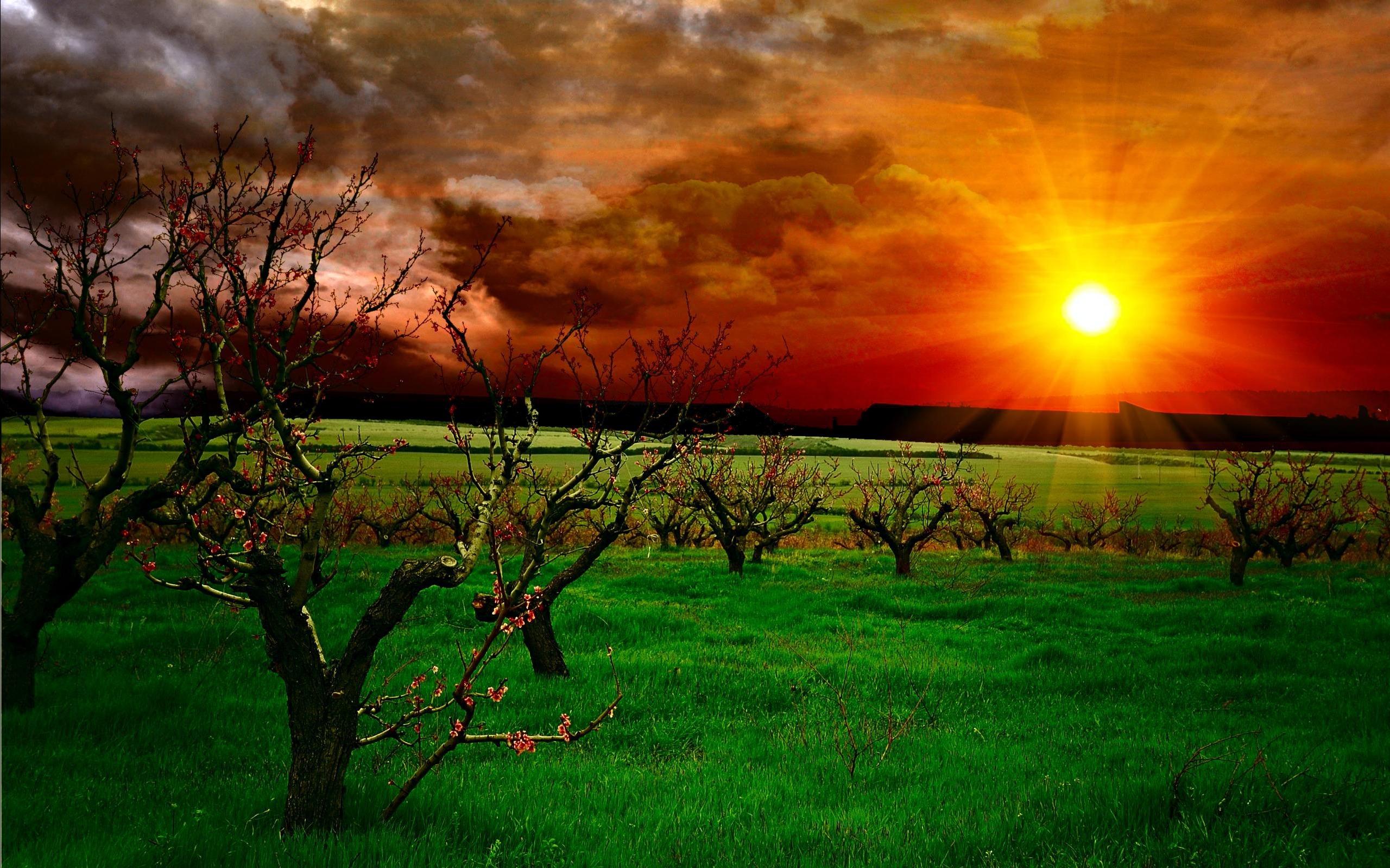 закат,деревья,зелень  № 1076646 загрузить