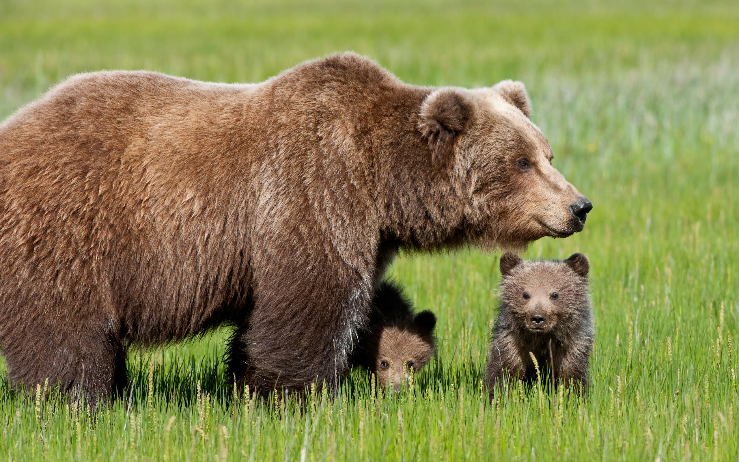 учёбе хорошо, крупные картинки с дикими животными компания является официальным