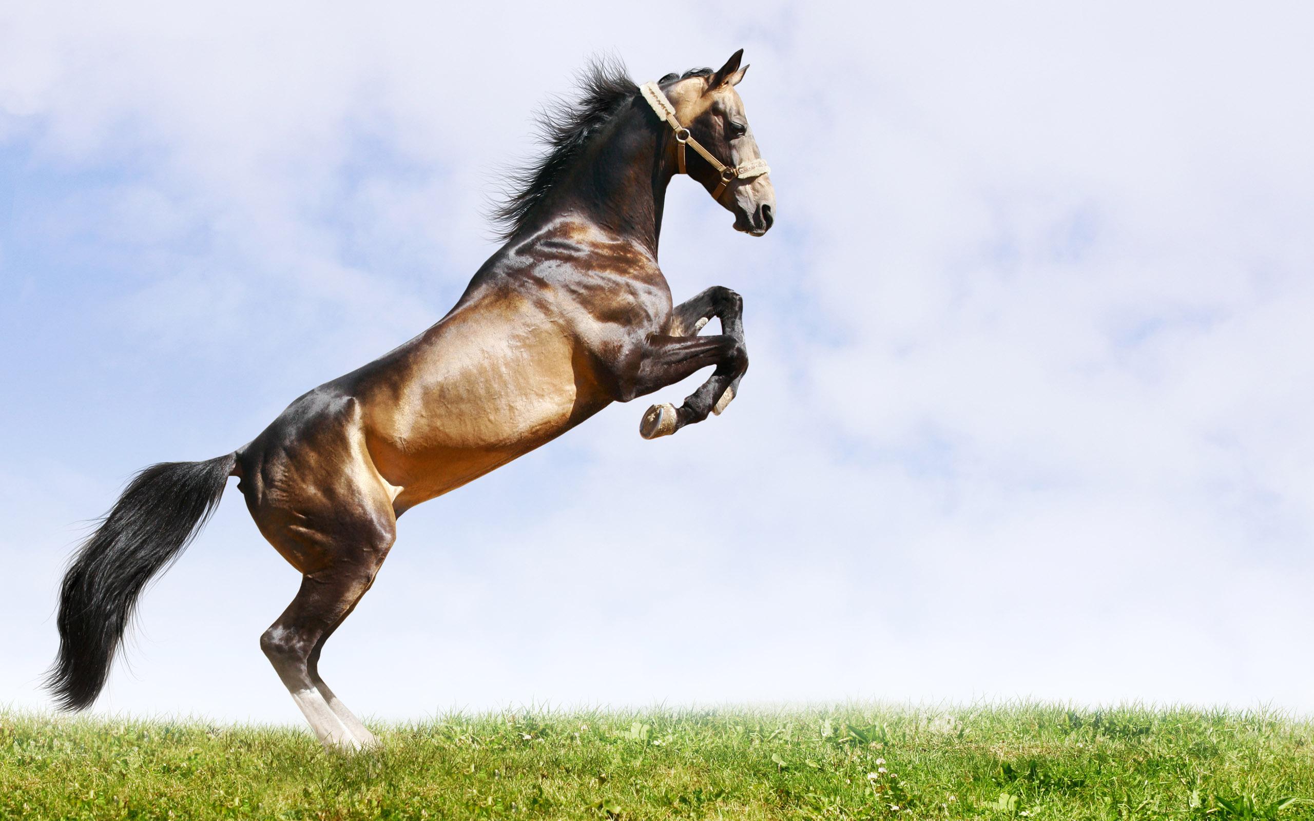рисунок графика лошадь природа животные figure graphics horse nature animals  № 3925596 бесплатно