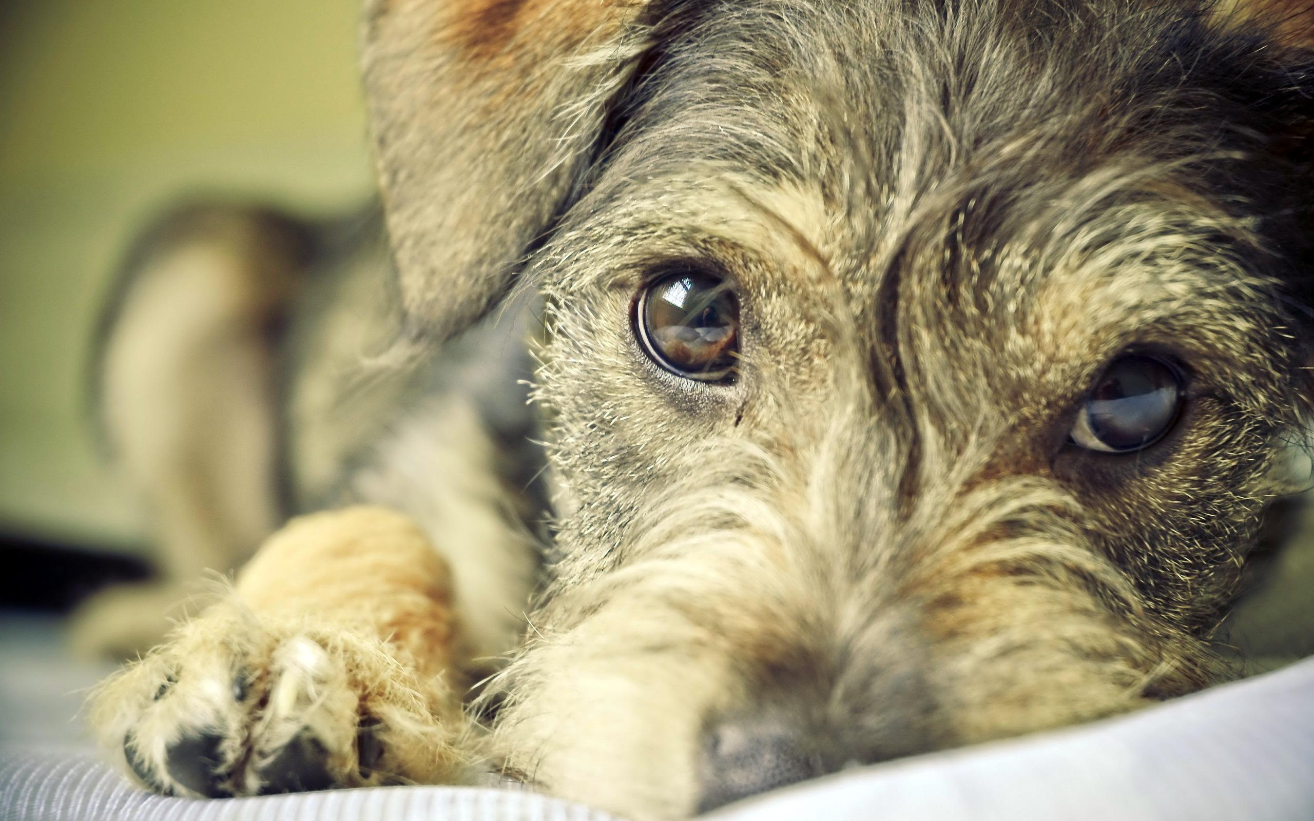 сейчас собака печальная фото правда, немного странное