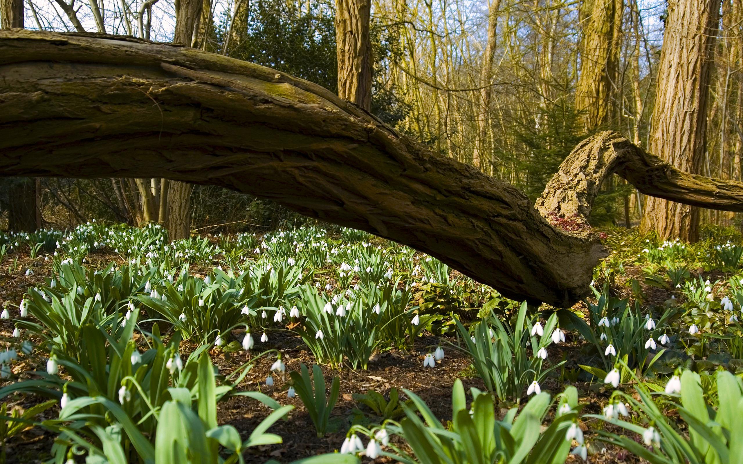 весной в лесу  № 113883 без смс