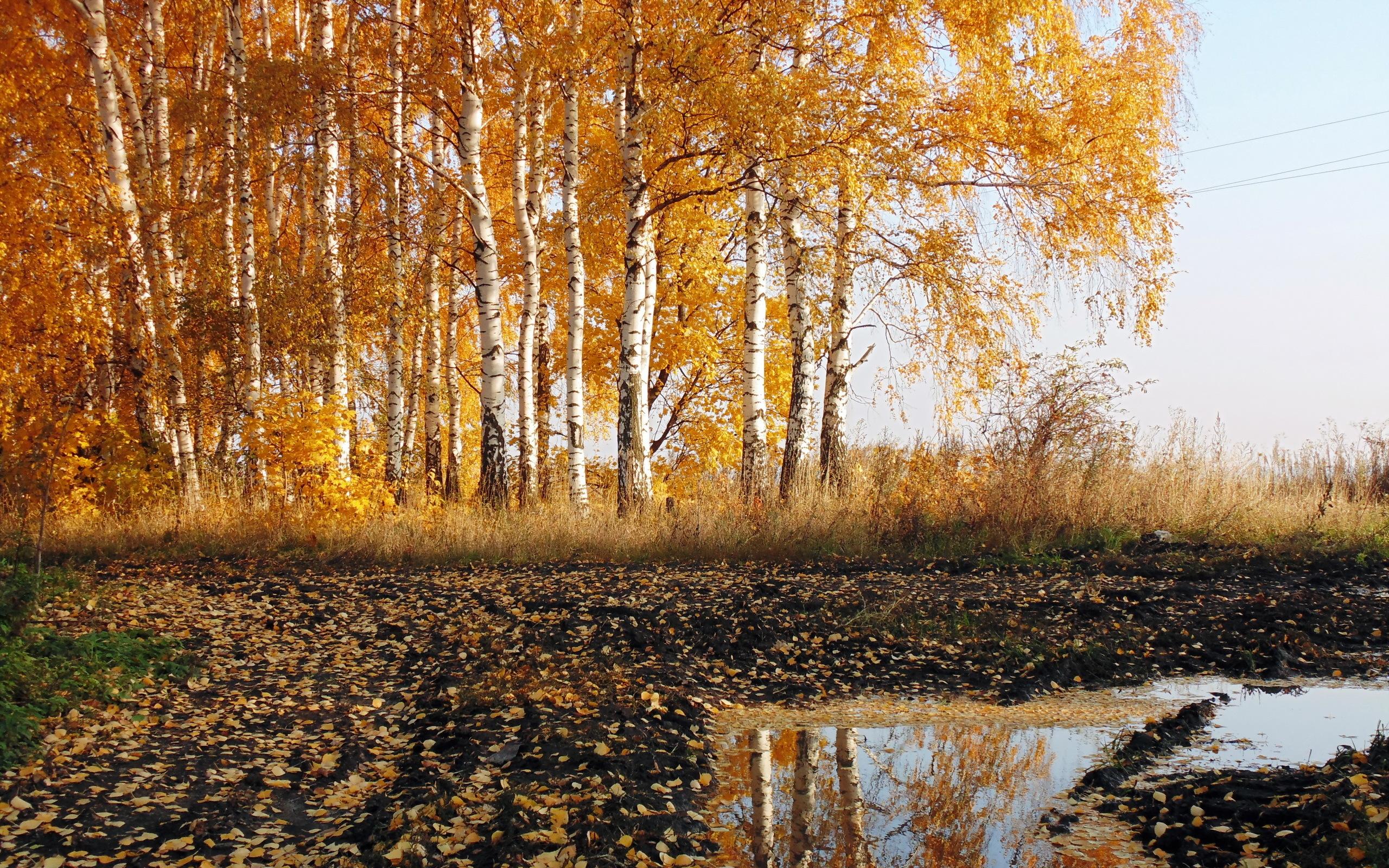 Октябрь картинки природа для детей