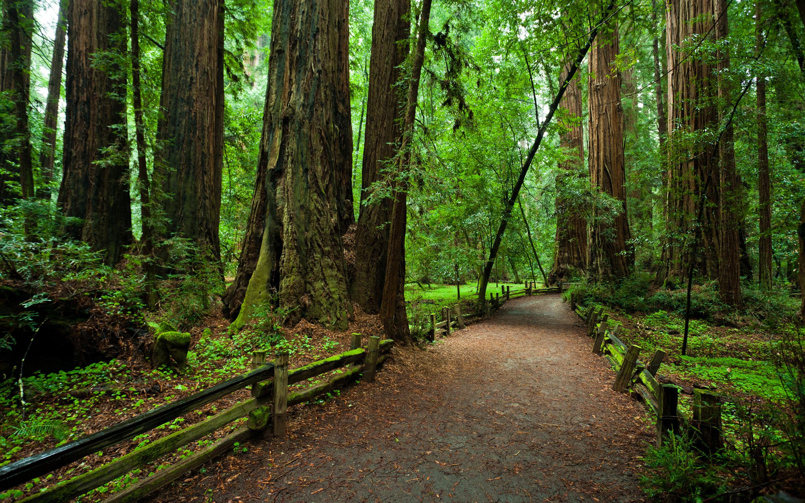 то, американский лес фото нашим сервисом