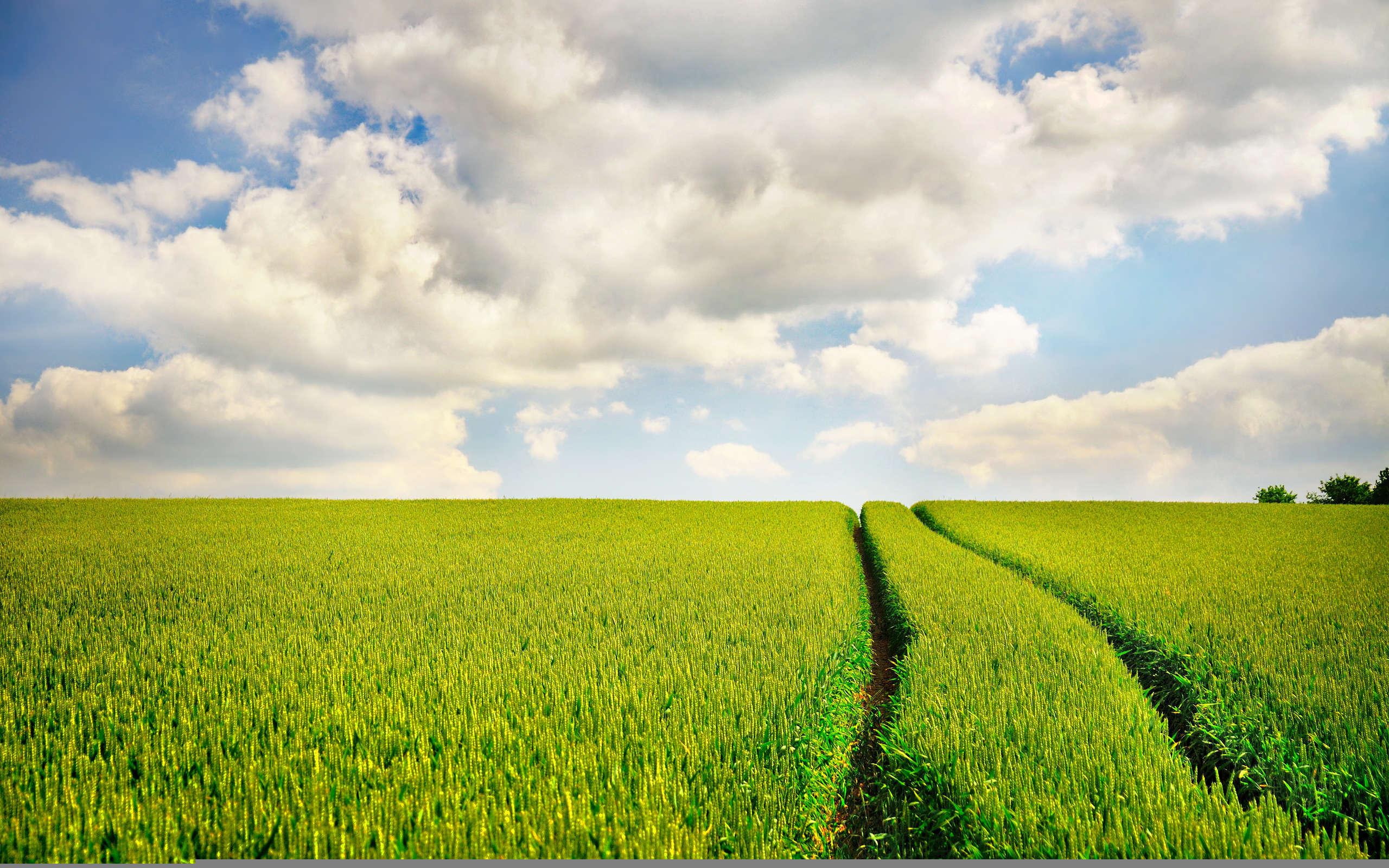 Дорога через зеленое поле  № 2604510 бесплатно