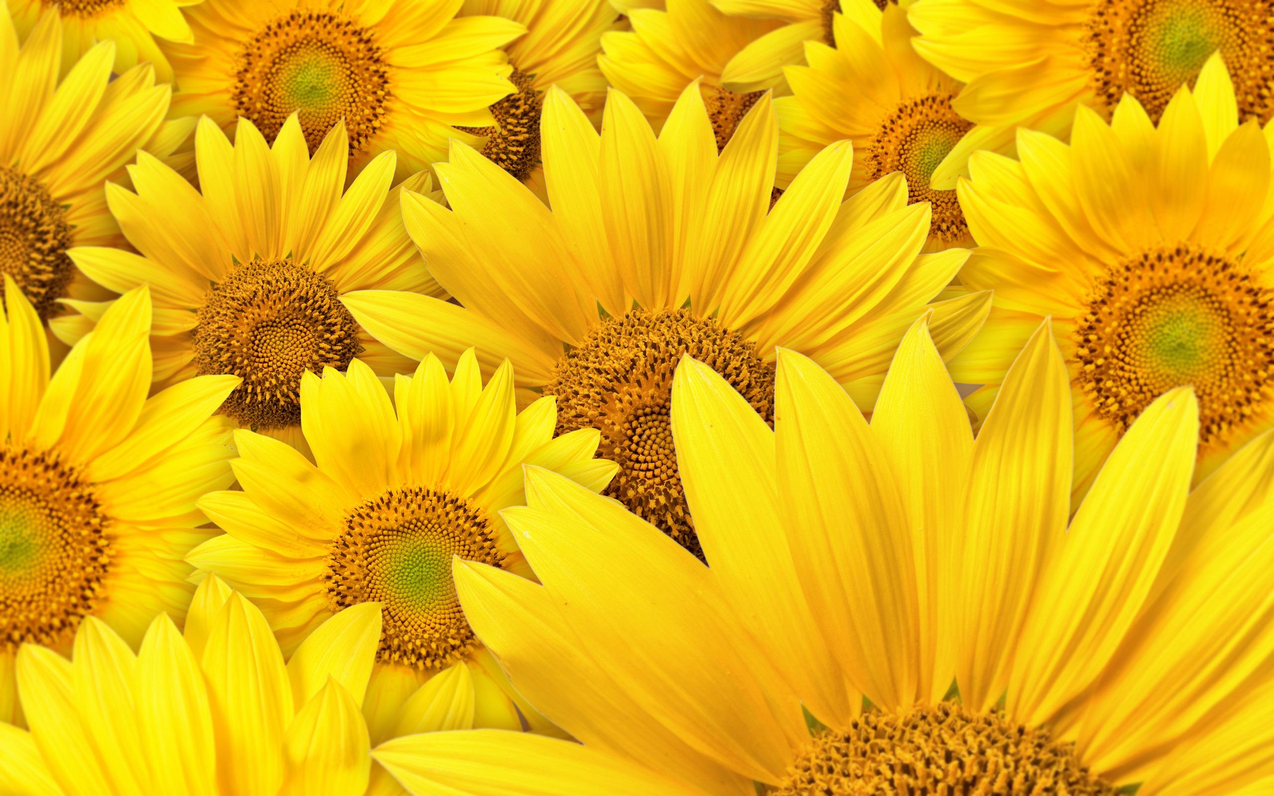 цветок желтый flower yellow  № 1246527  скачать