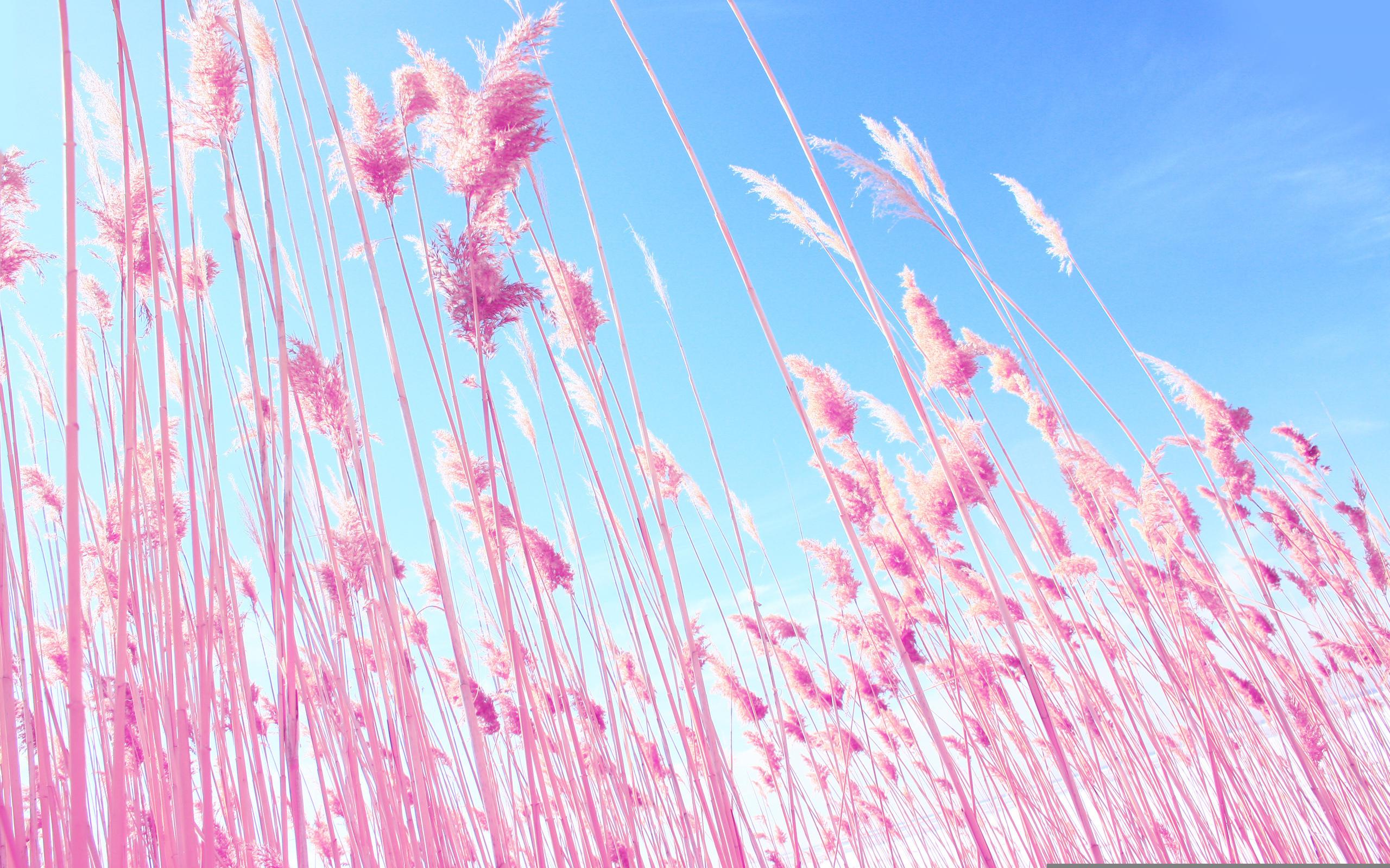картинки в розовых тонах на телефон запросу