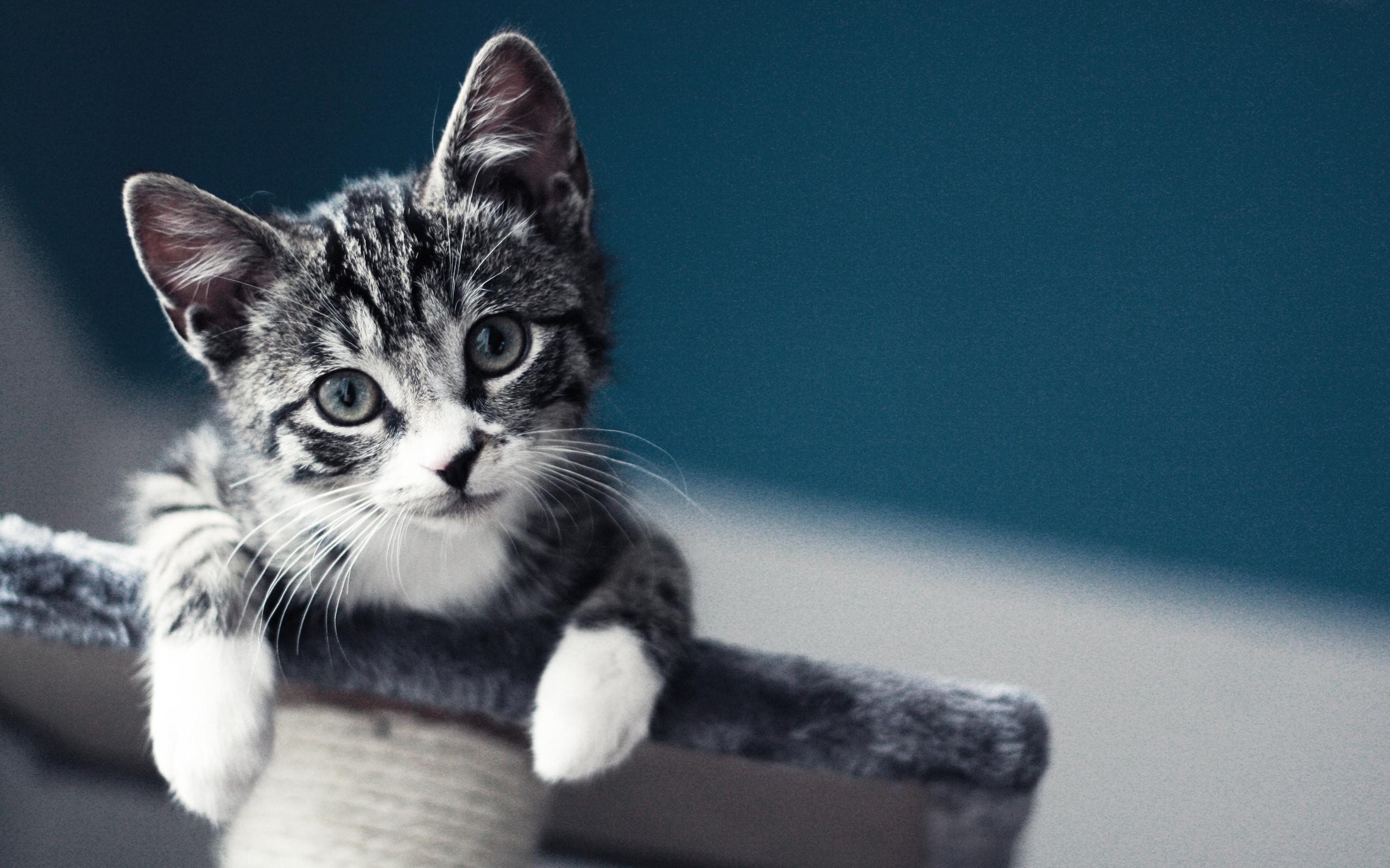 Котенок картинки для рабочего стола прикольные