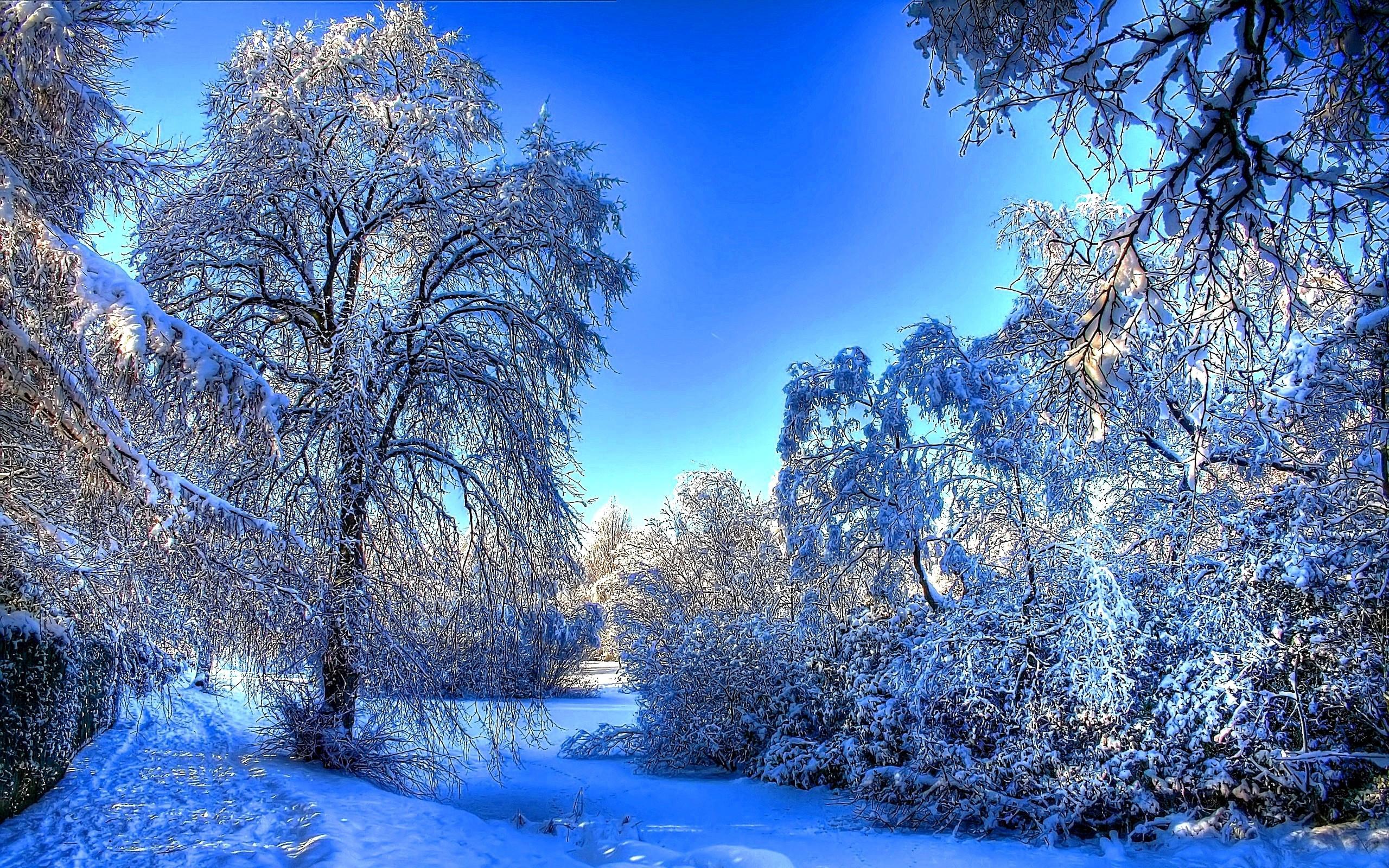 прибор смотреть картинки зимы на рабочий стол люди, виновата