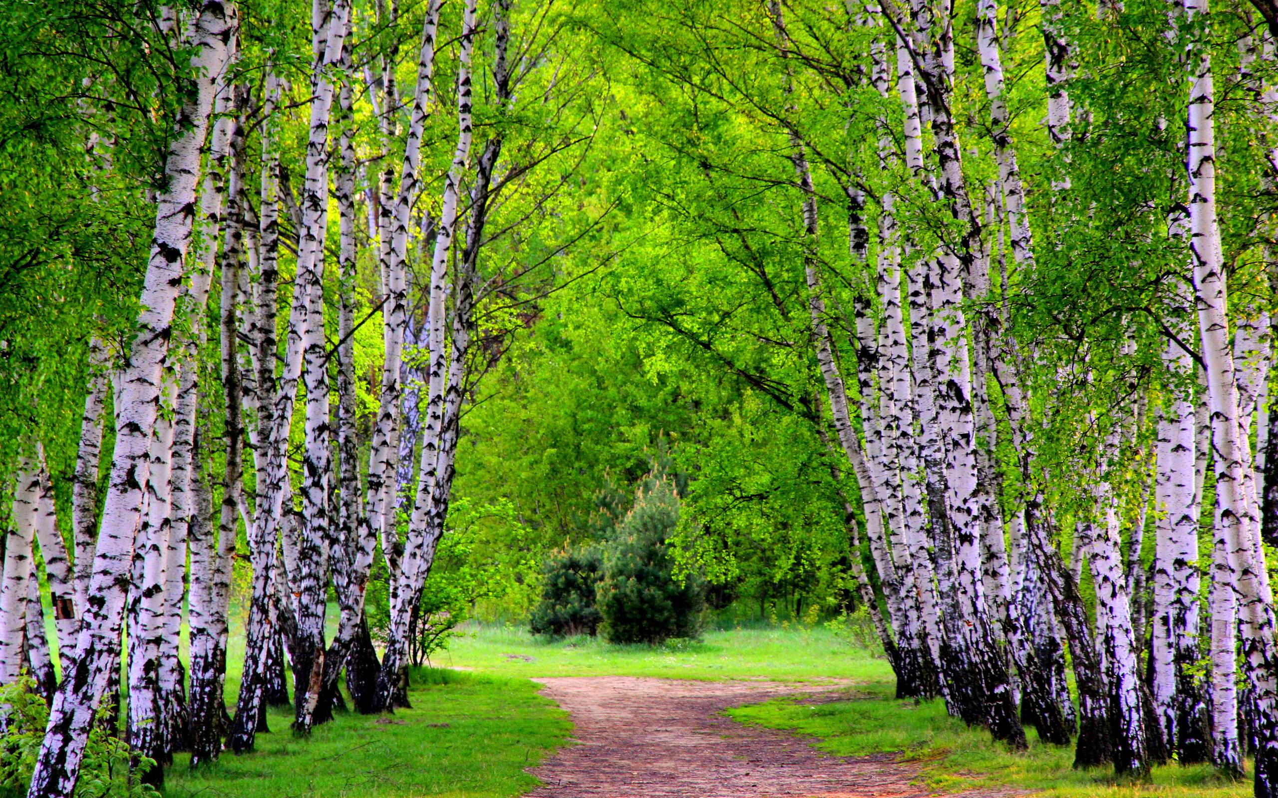 Пожеланием, картинка природа россии весной