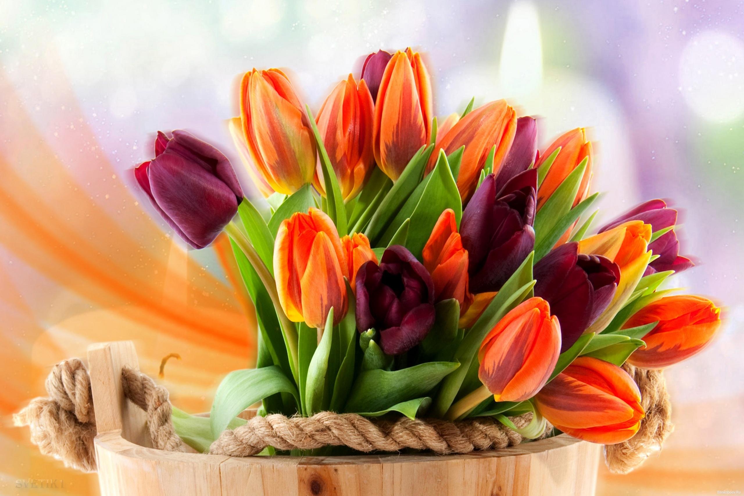 монтированный открытка с днем рождения красивый букет тюльпанов дюбель
