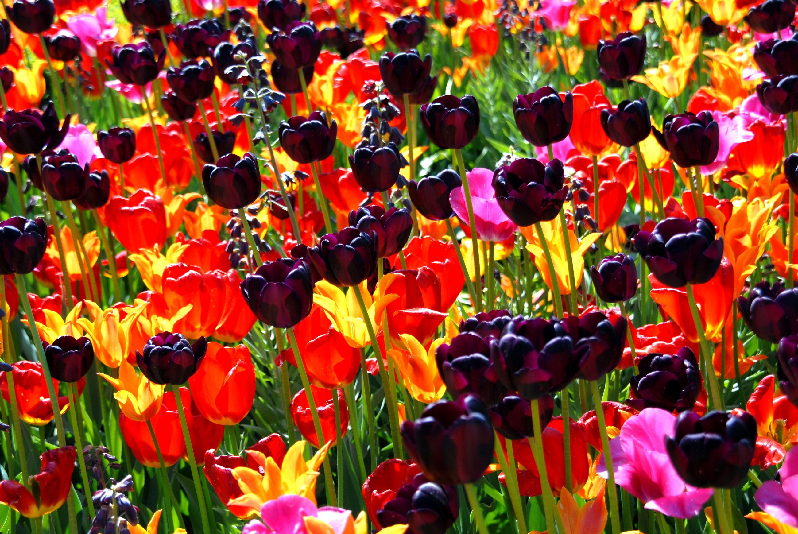 моделей природа красивые картинки разные цветы выбрали благородную