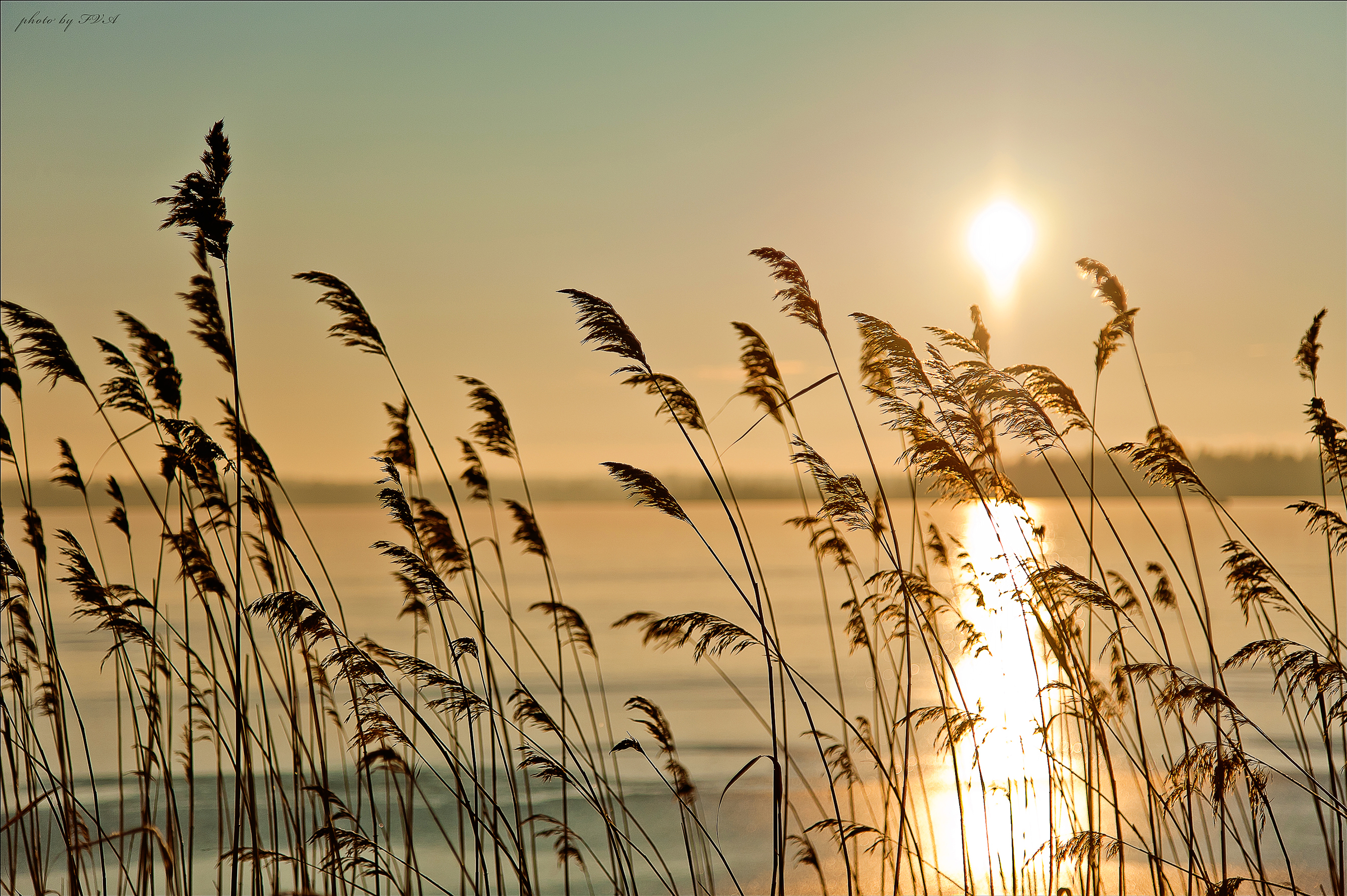 природа цветы трава мельниц восход солнце  № 2556695 загрузить