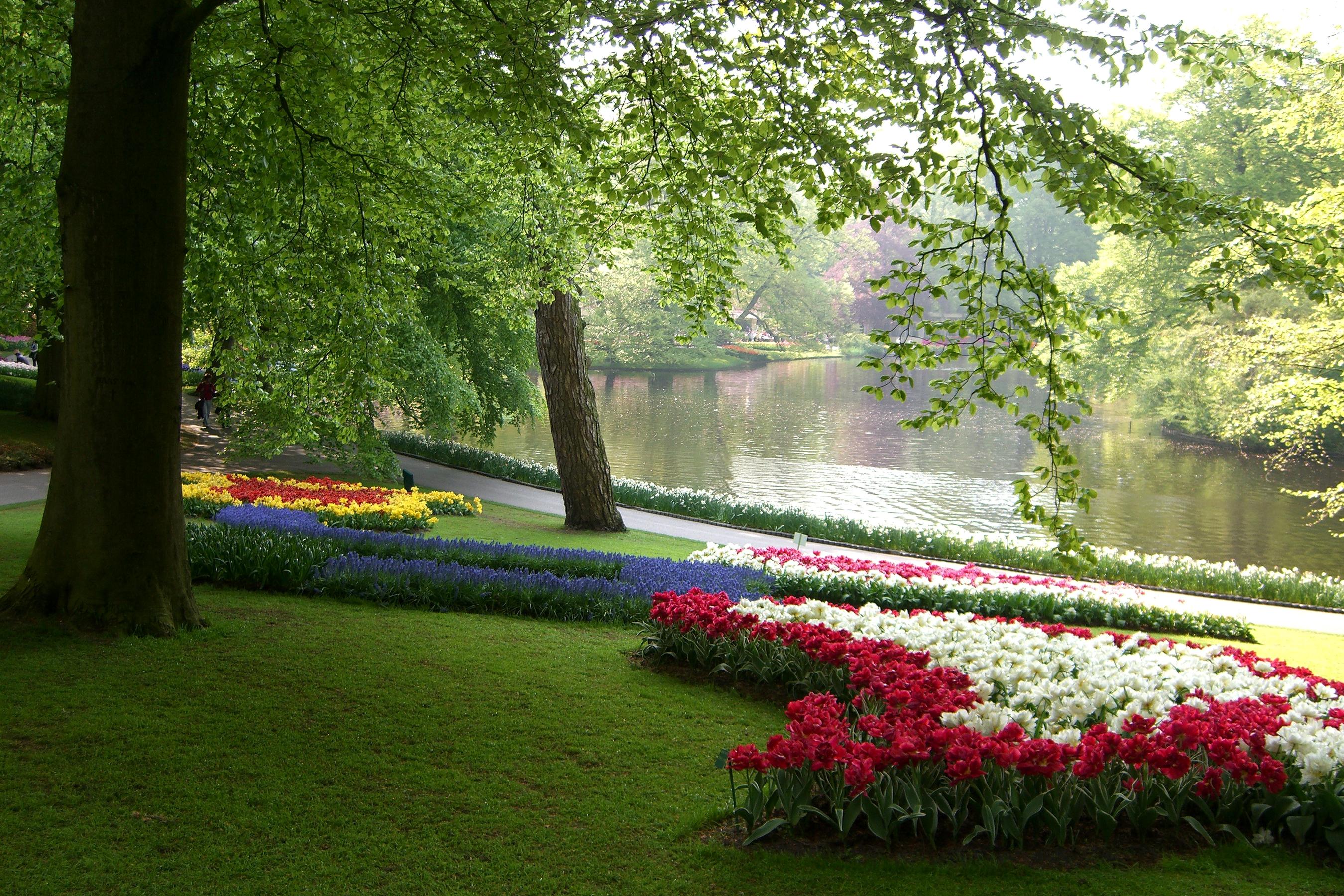 Цветущий летний сад в картинках