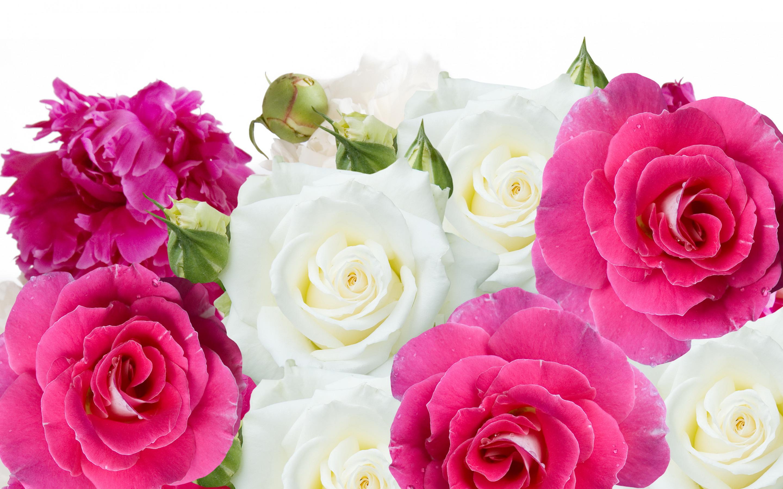 обои для рабочего стола пионы розы № 422819 загрузить
