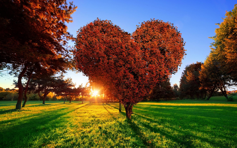 картинки дерево любви этого