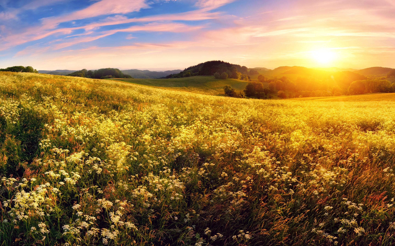 Раскраска, открытка природа солнечная очень
