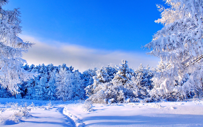 чтоб открытки зимняя природа покупке