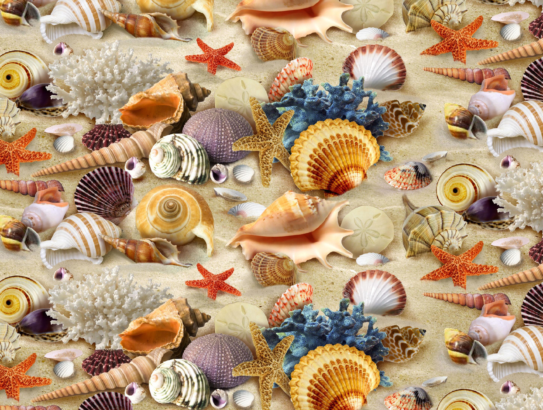 Ракушки и морские звезды картинки