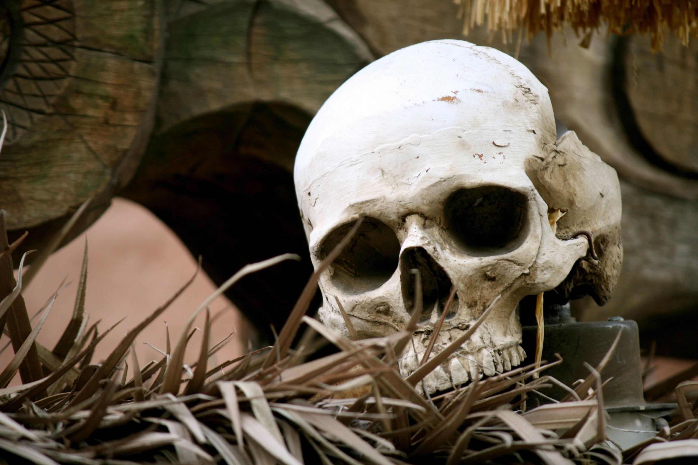 Скелеты страшные картинки на рабочий стол