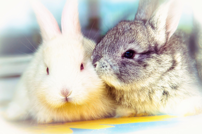 захотелось самые милые кролики картинки много цветы