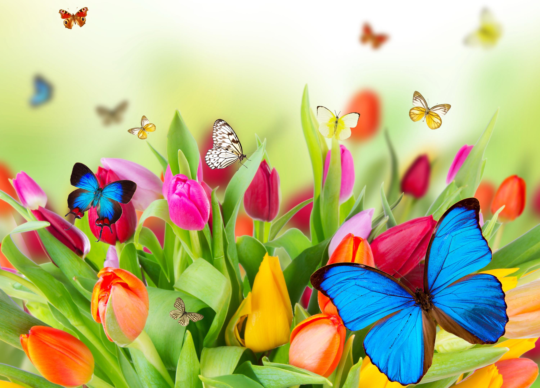 Цветы и бабочки открытки, гифки