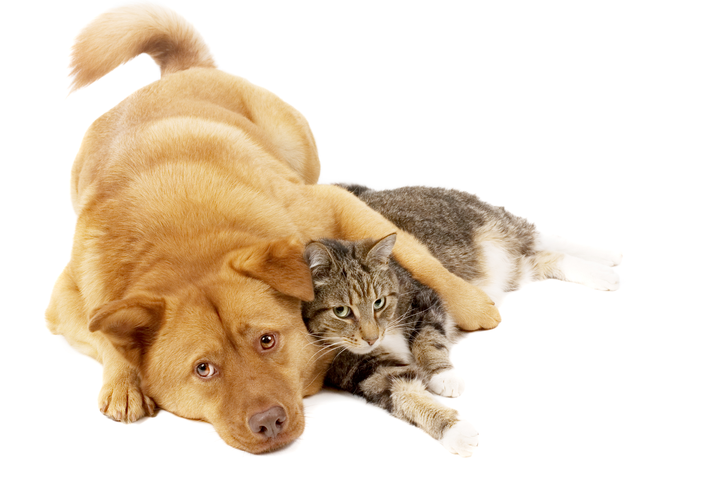 Собака с котом картинки