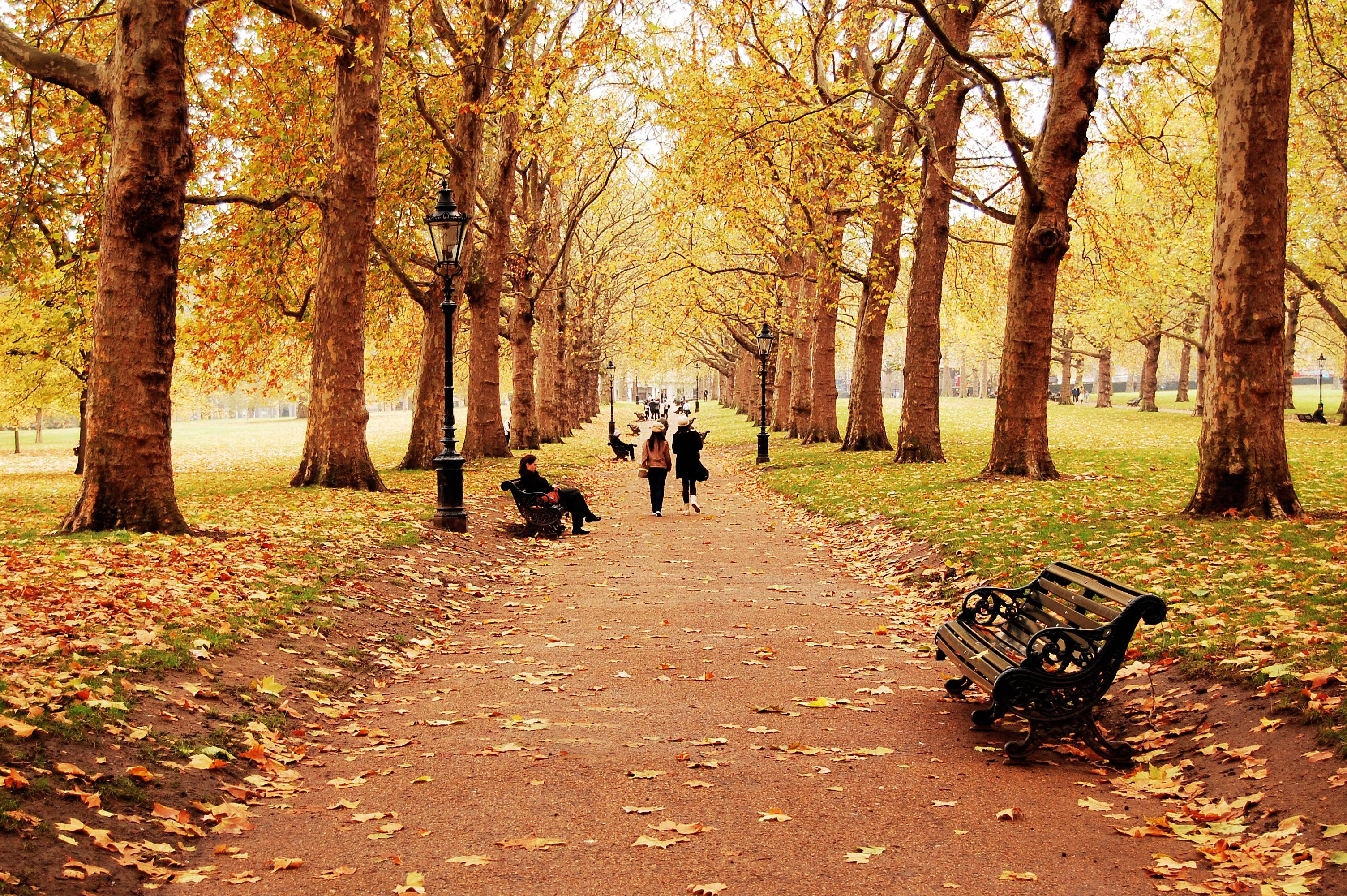 Картинки для детей осень в парке