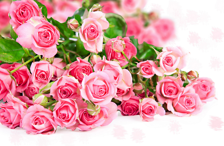 Обои открытки роз, картинки признания любви