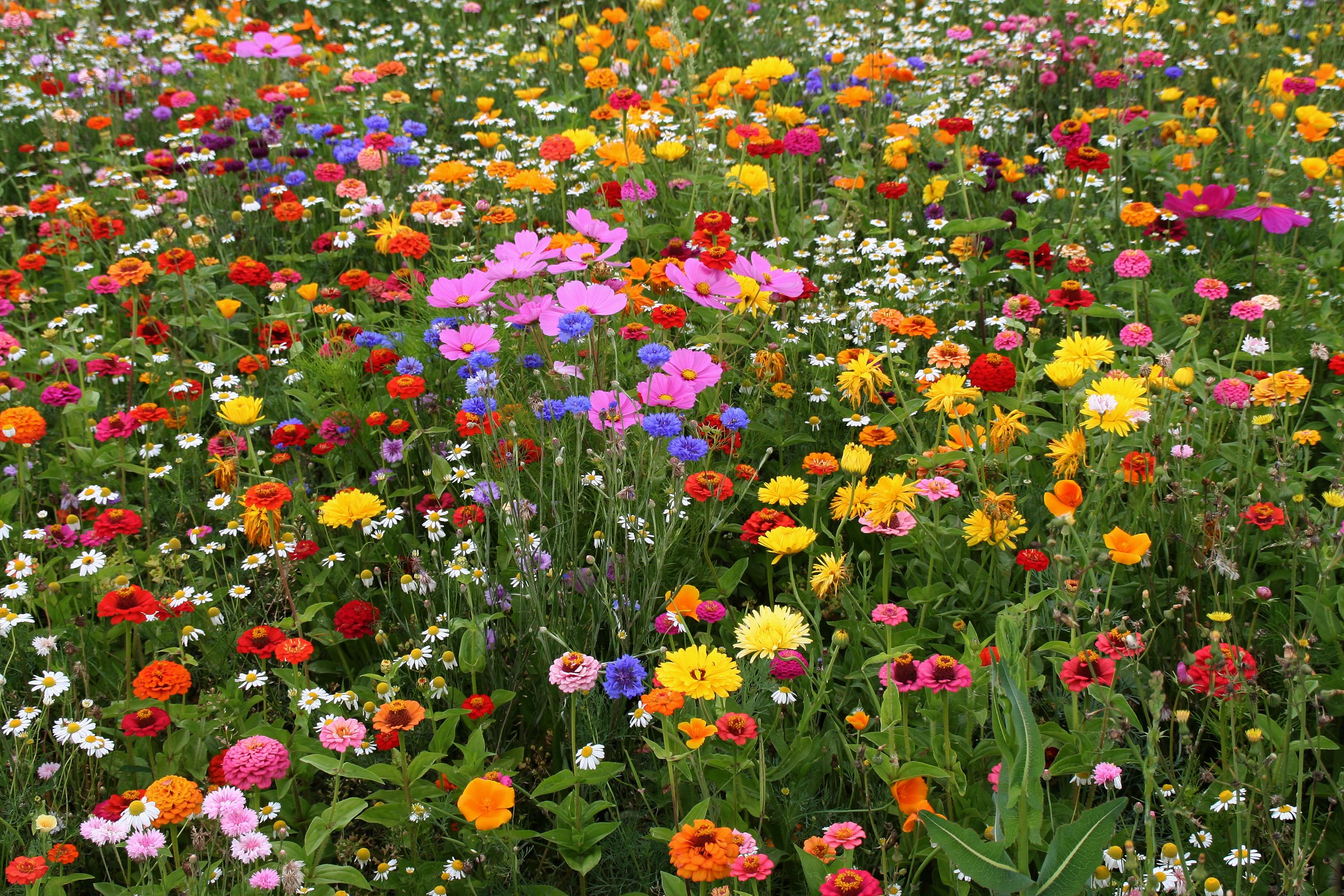 Заказ цветов, цветы г луга опт