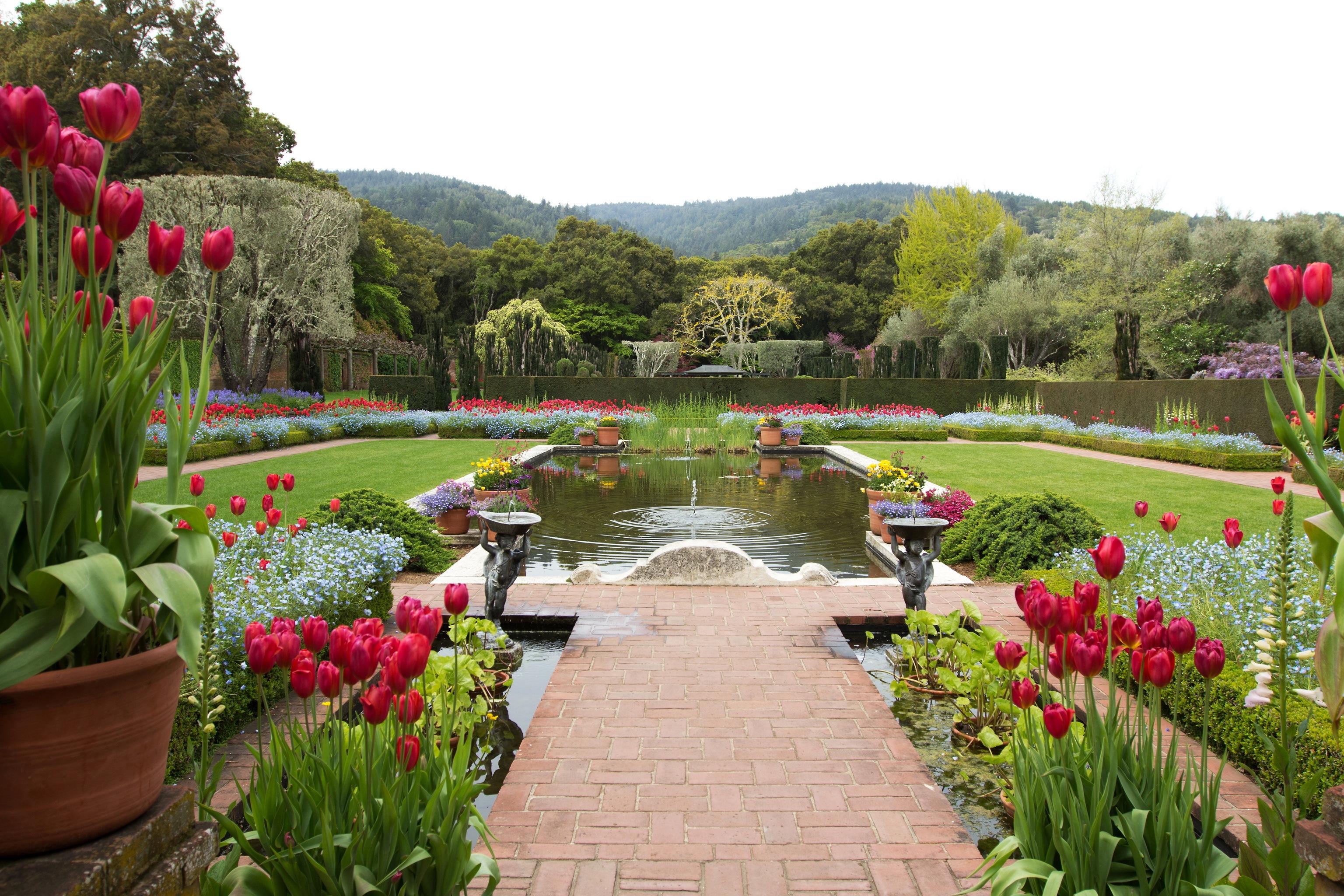 Роскошный сад фото