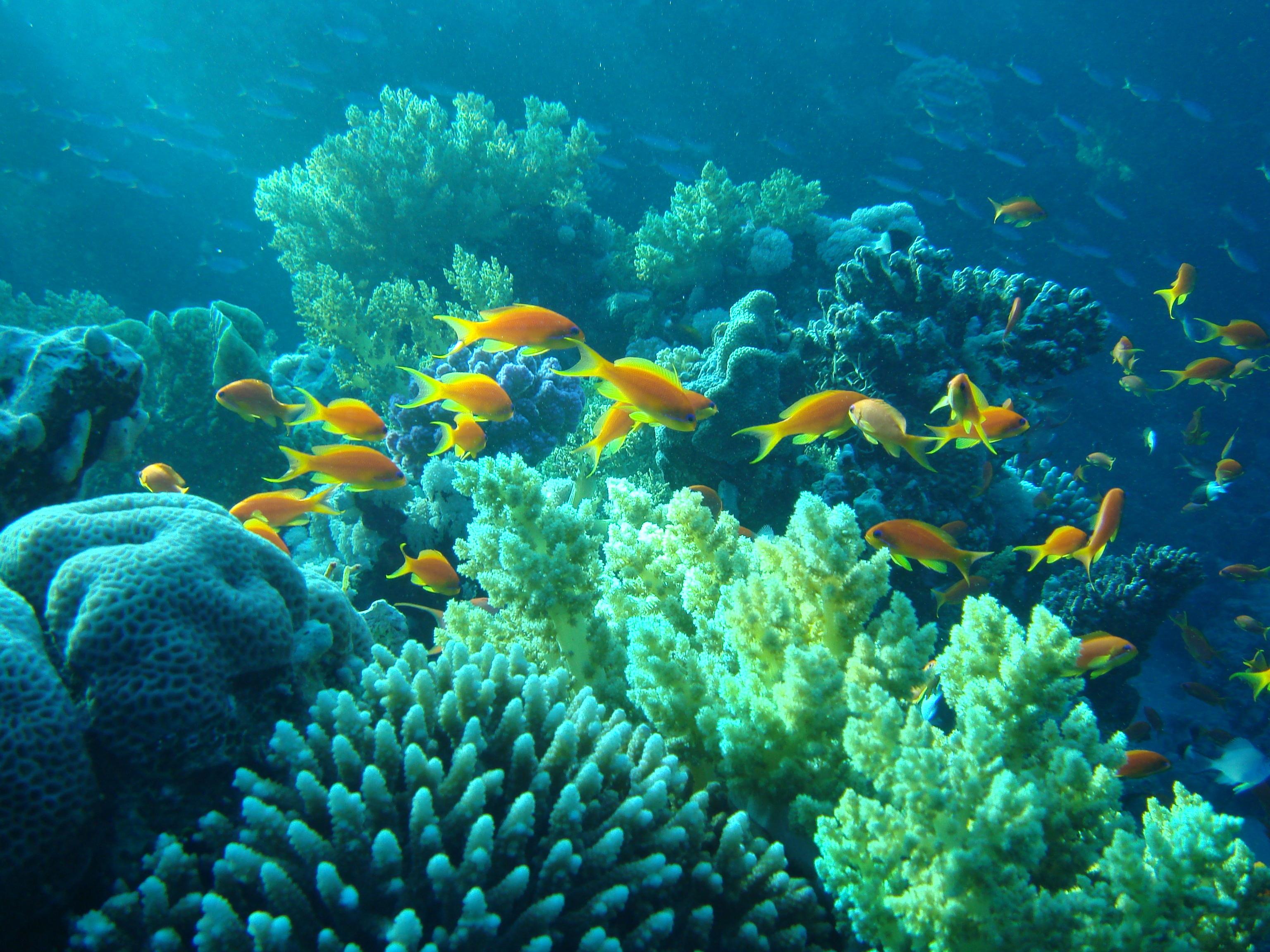 Красивые картинки подводный мир, днем рождения