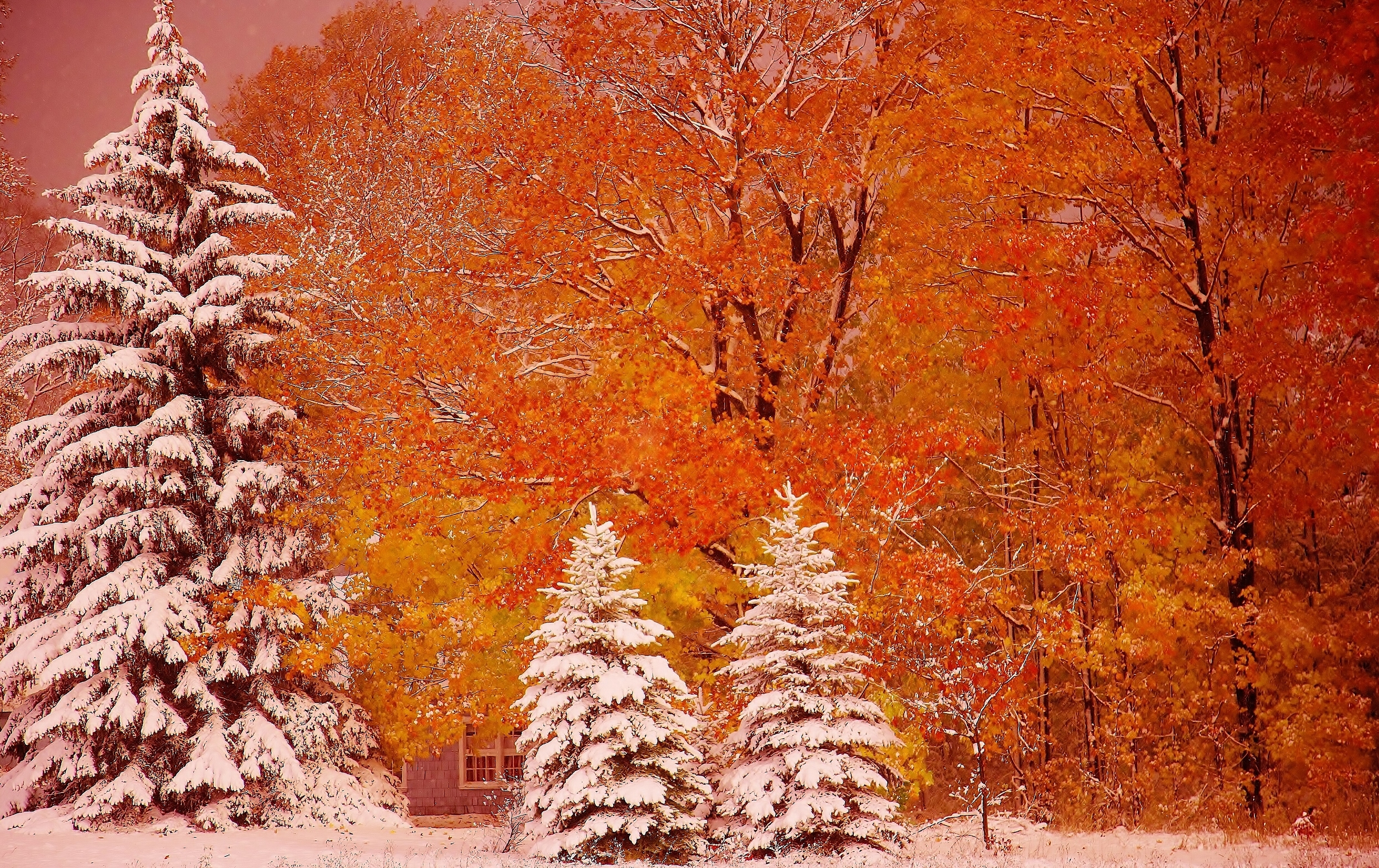 Фотообои ранняя зима на рабочий стол