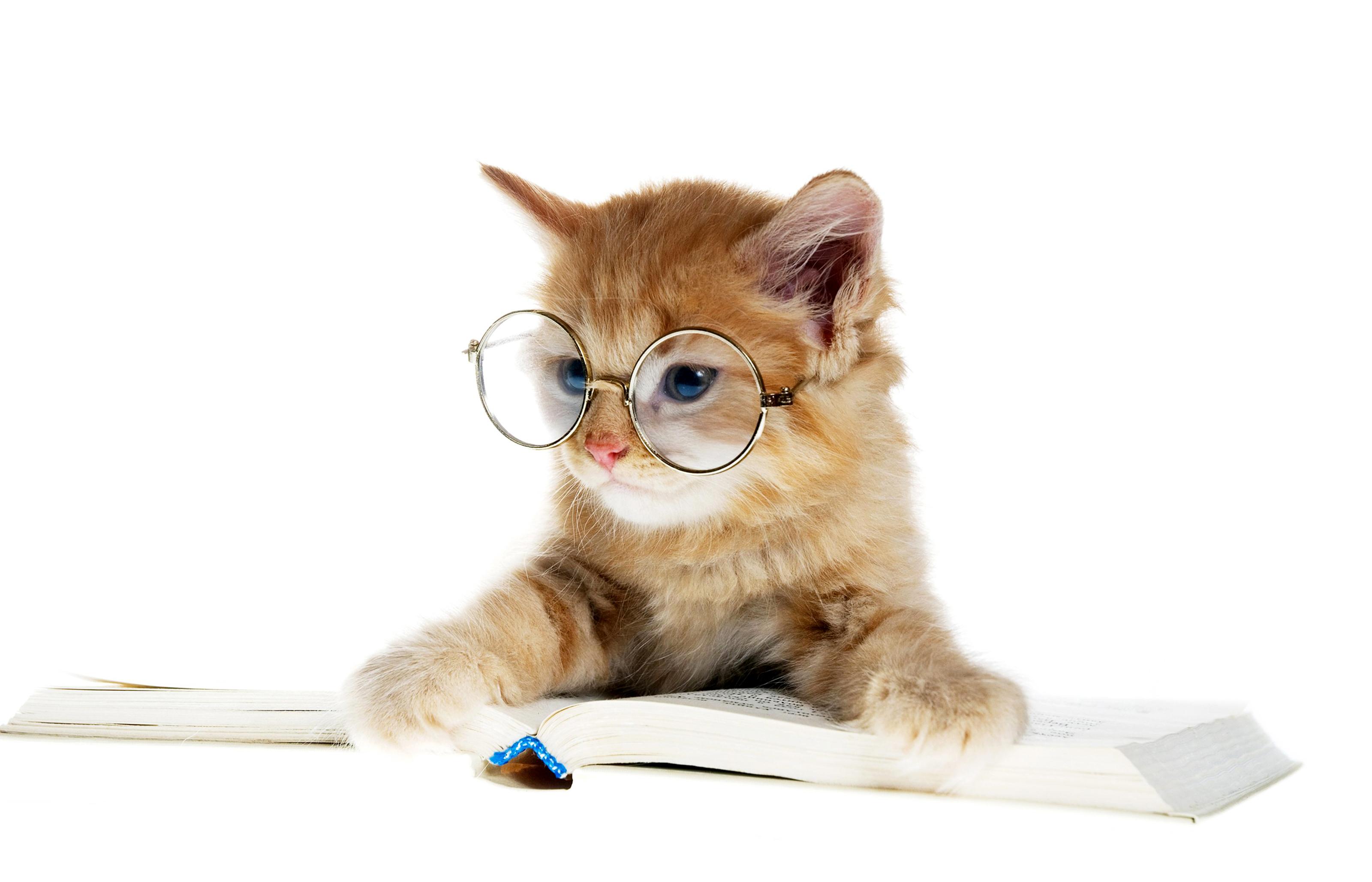 картинки умных кошек далее как
