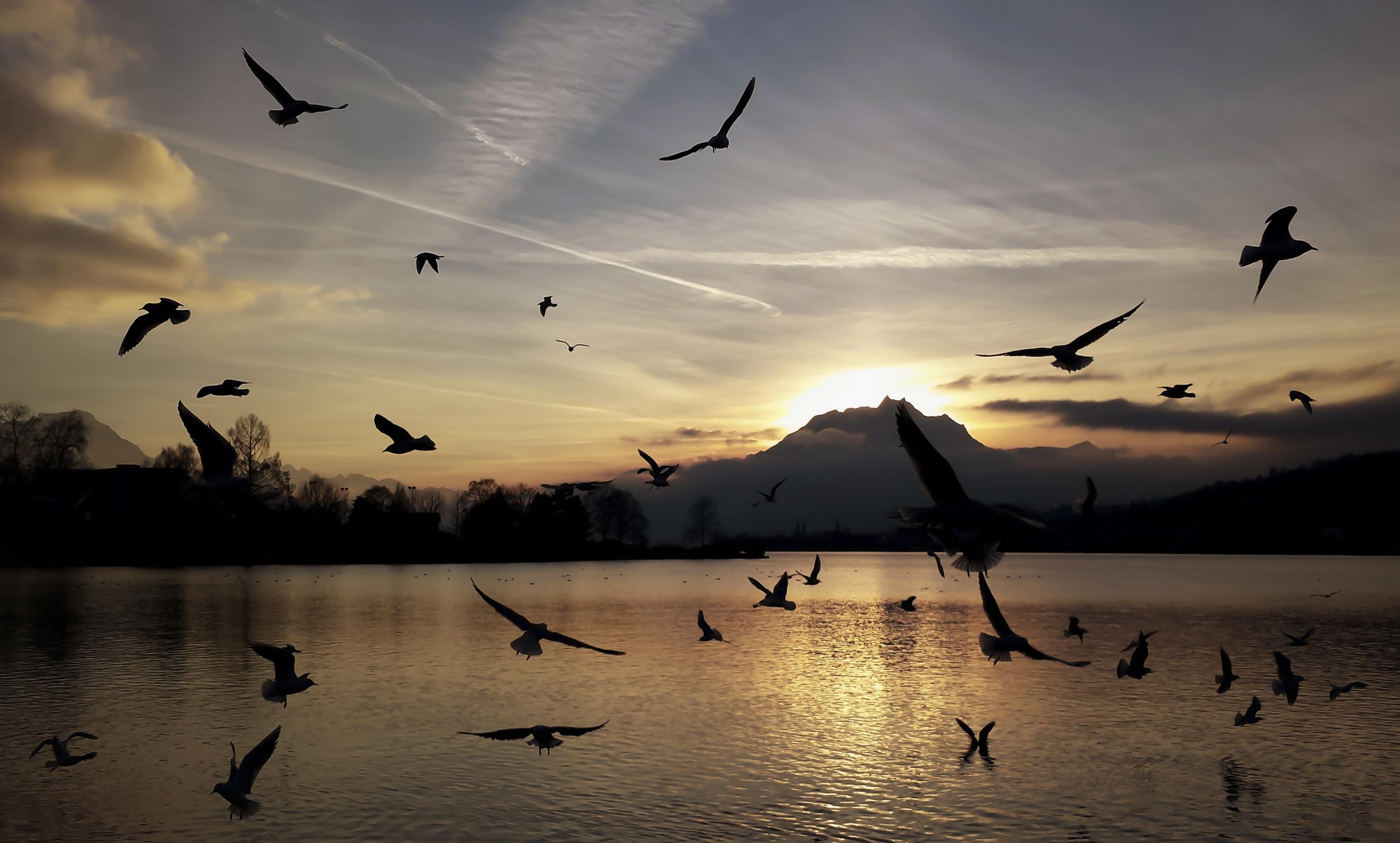 пейзажные фото птицы в полете маникюр подчеркивает уникальность