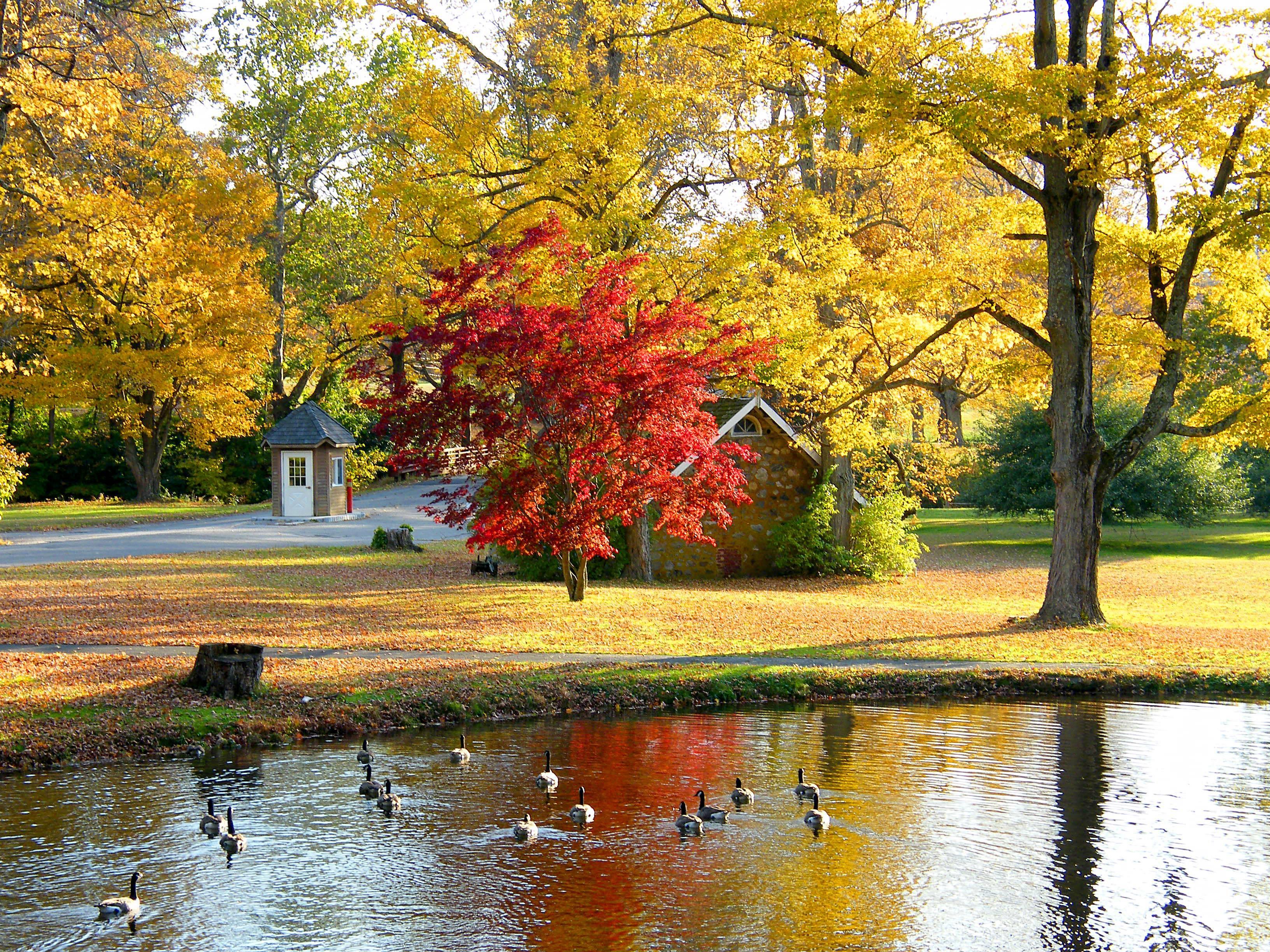 Обои рабочий стол пейзажи осень дом
