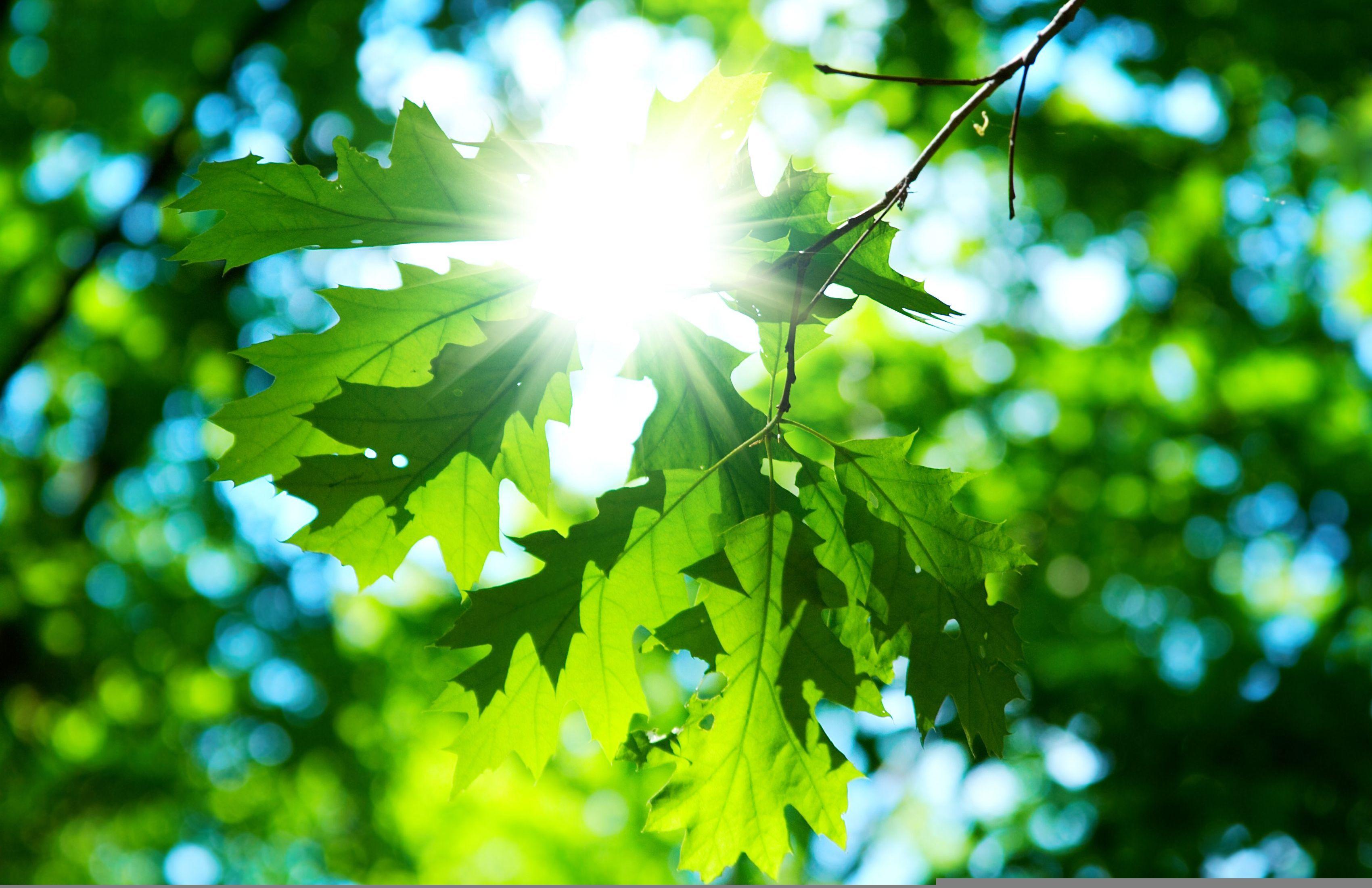 Лучи света сквозь листья  № 3096072 бесплатно