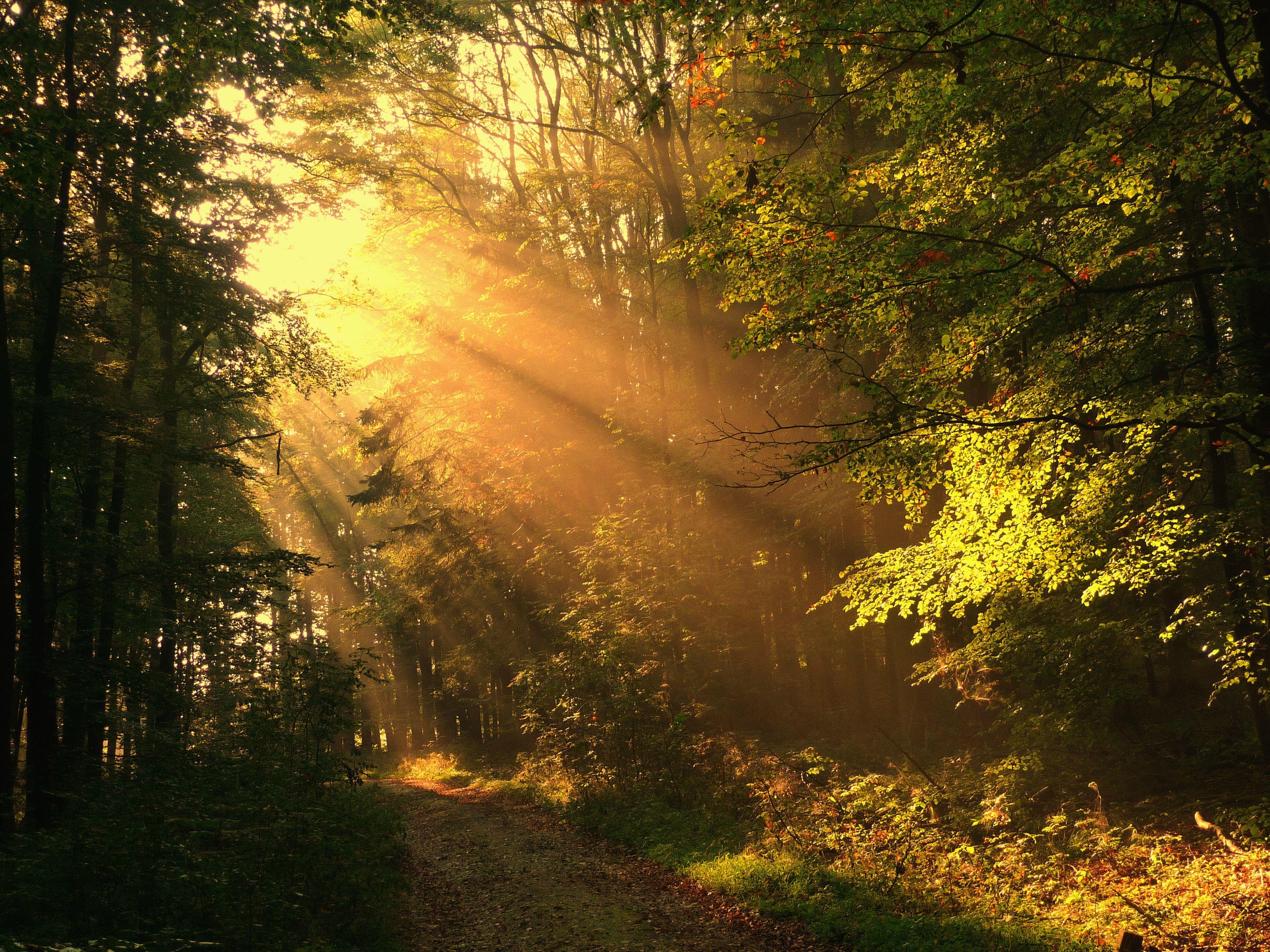Картинки лучи солнца сквозь листву